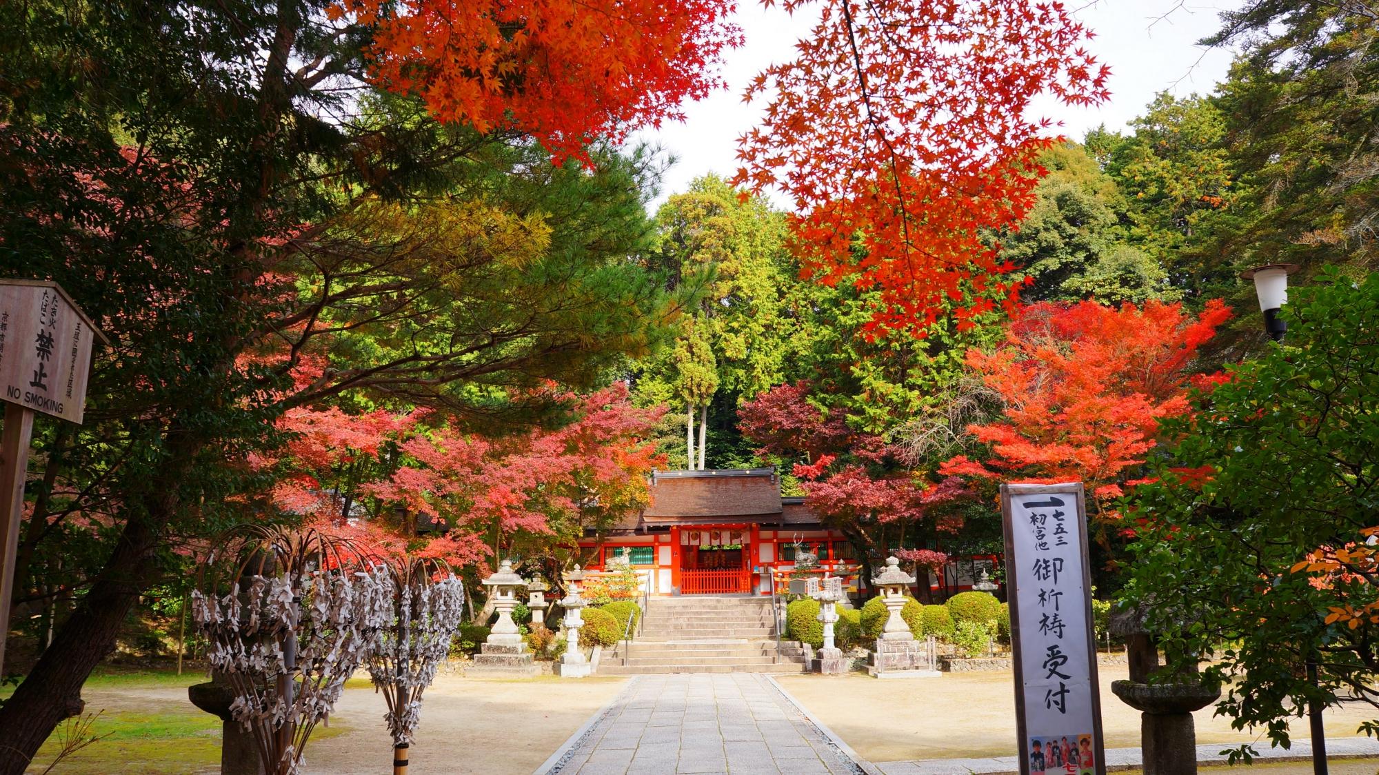 大原野神社の本殿と紅葉