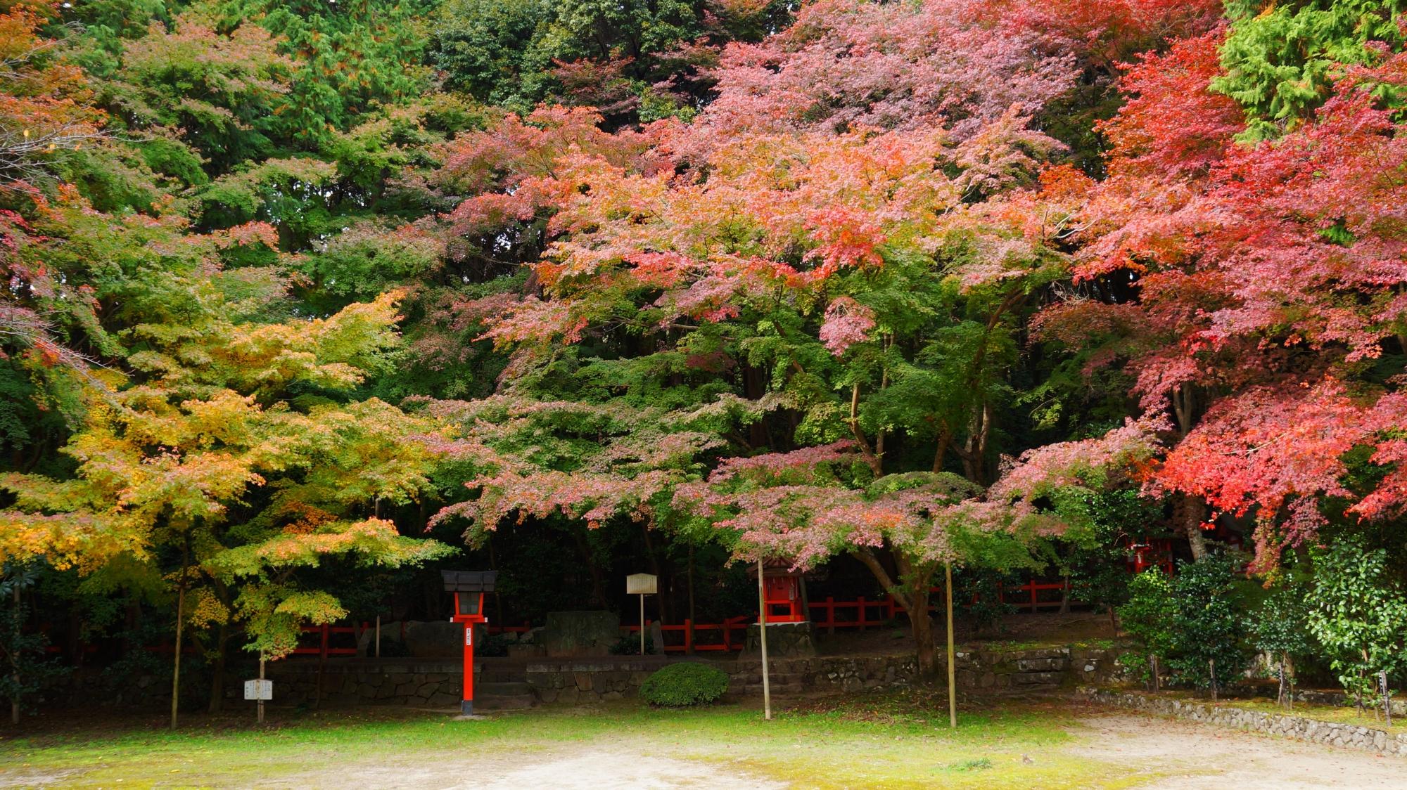 大原野神社の本堂横の紅葉
