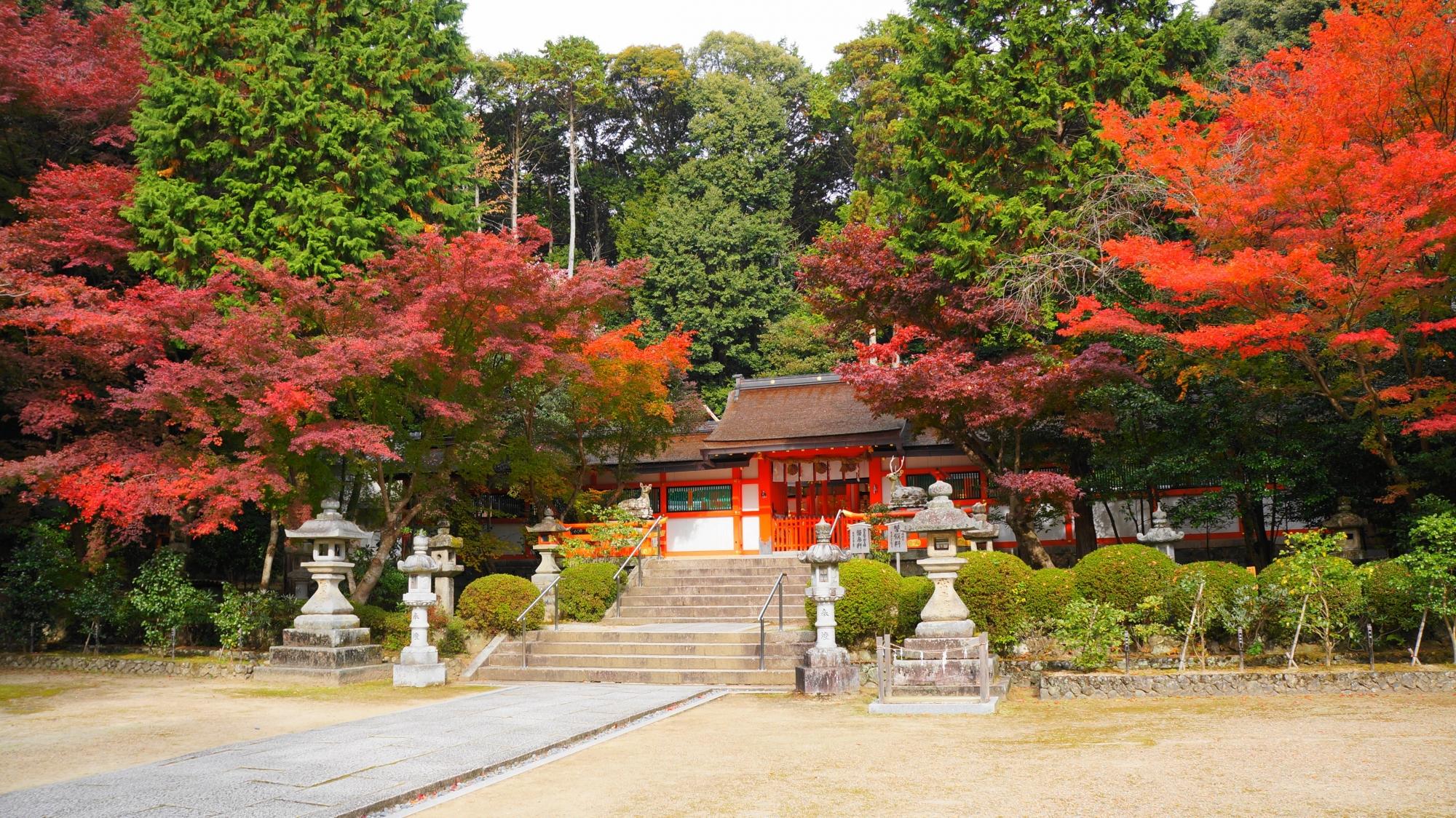 大原野神社の本殿横の色合いの違う紅葉