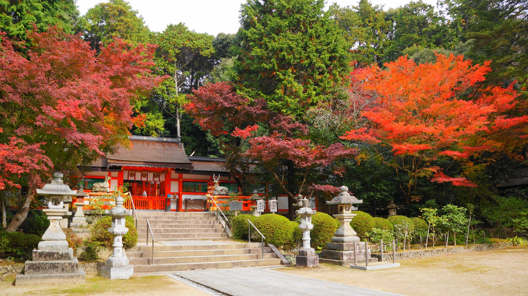 大原野神社の鮮やかな紅葉につつまれた本殿