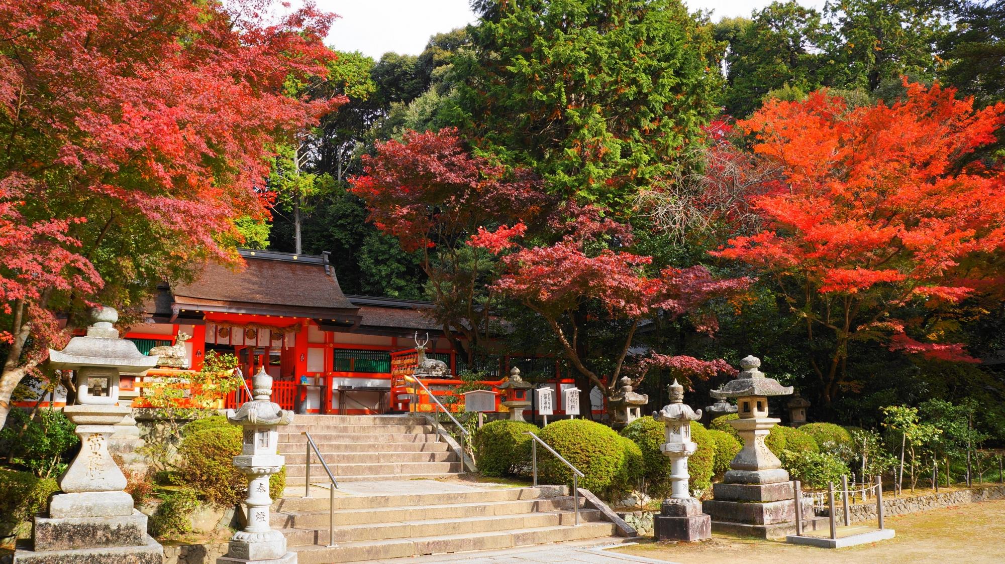 大原野神社の紅葉を楽しむ狛鹿