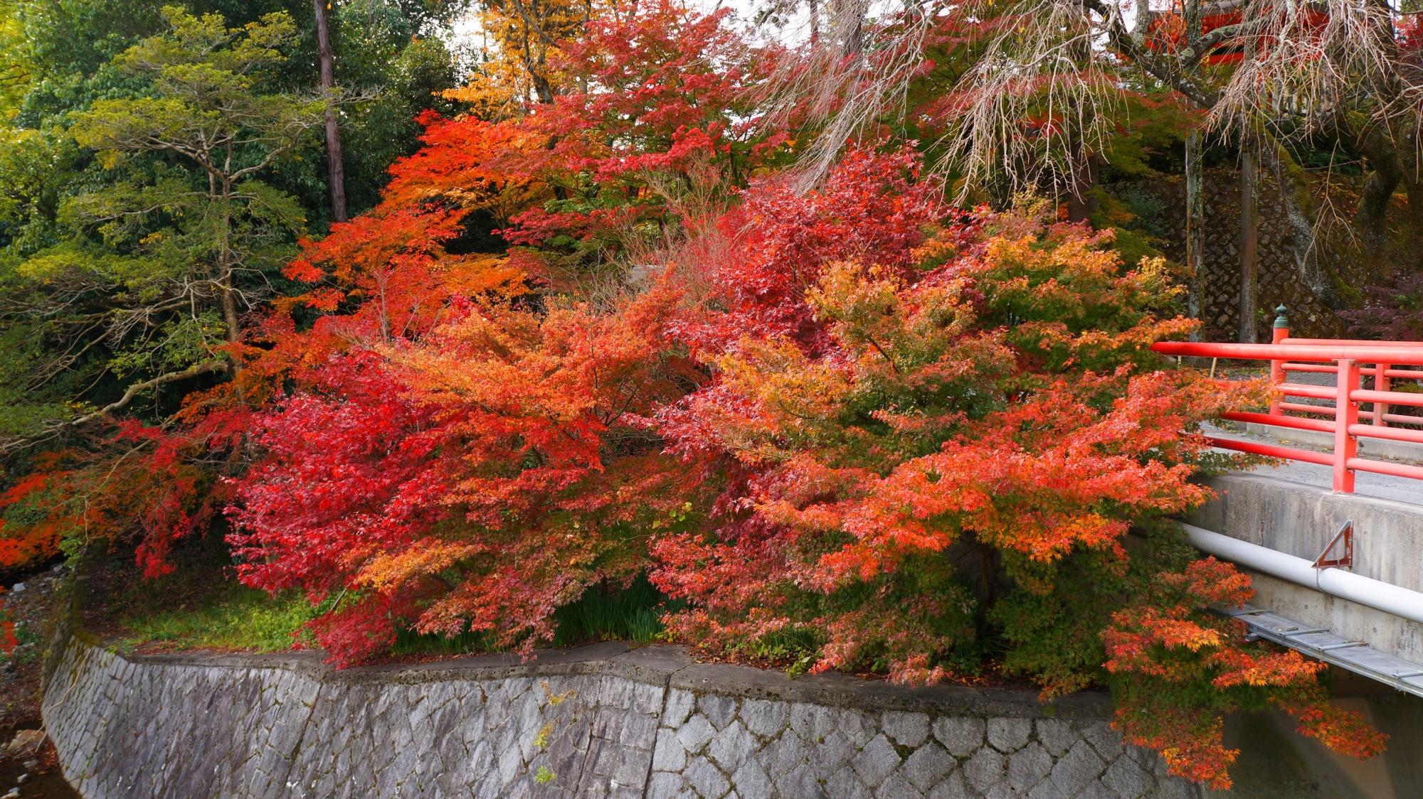 正法寺の見事な色とりどりの秋色