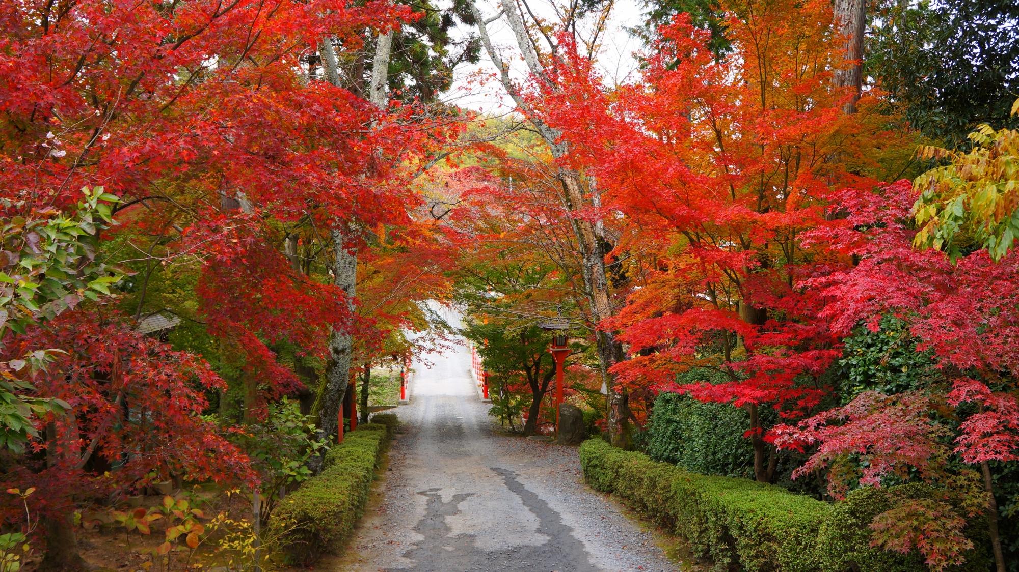 正法寺の鮮やかな紅葉のトンネル