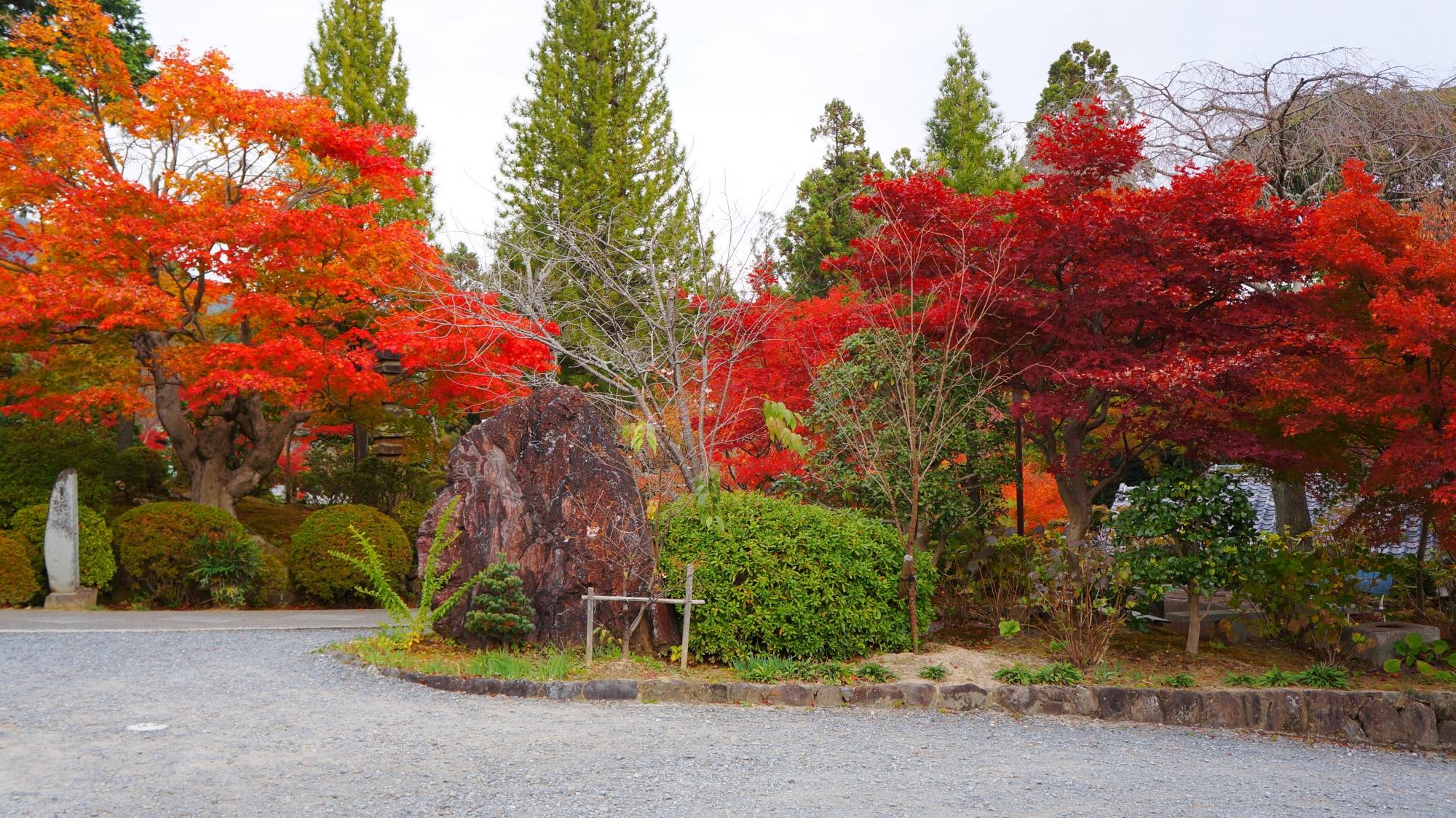 正法寺の山門前の豪快に色づく紅葉