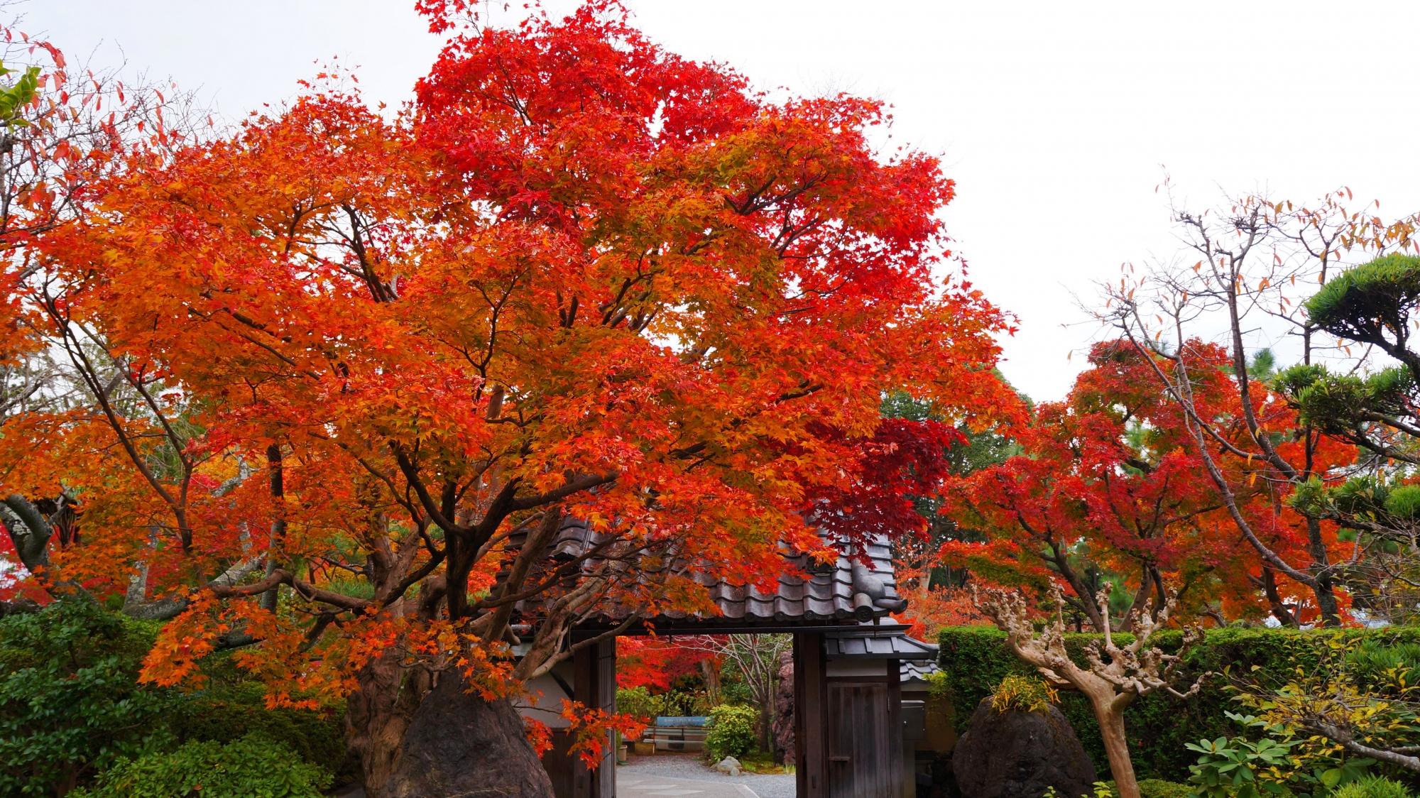 内側から眺めた山門と圧巻の紅葉