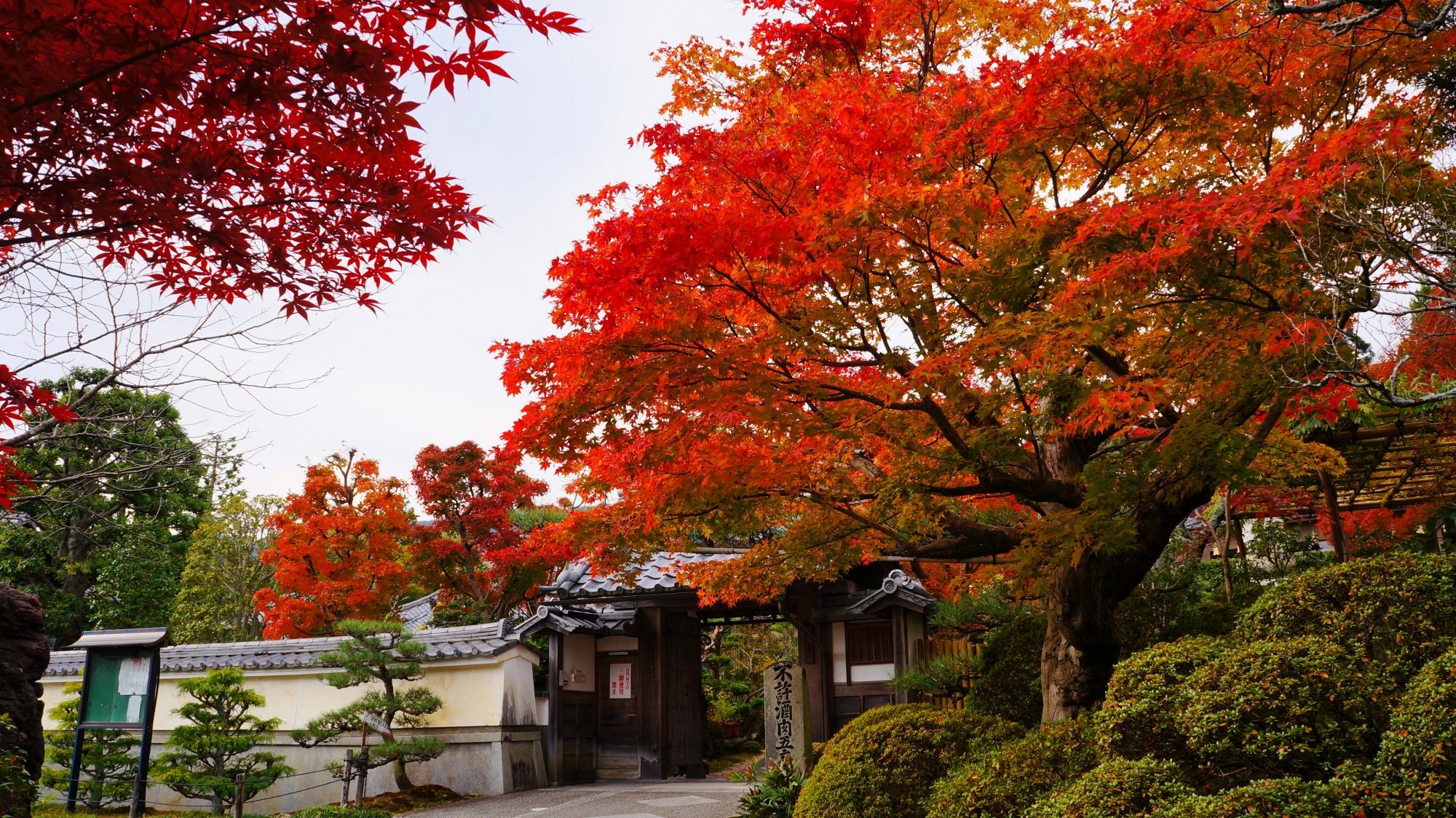山門をつつむ鮮やかな紅葉
