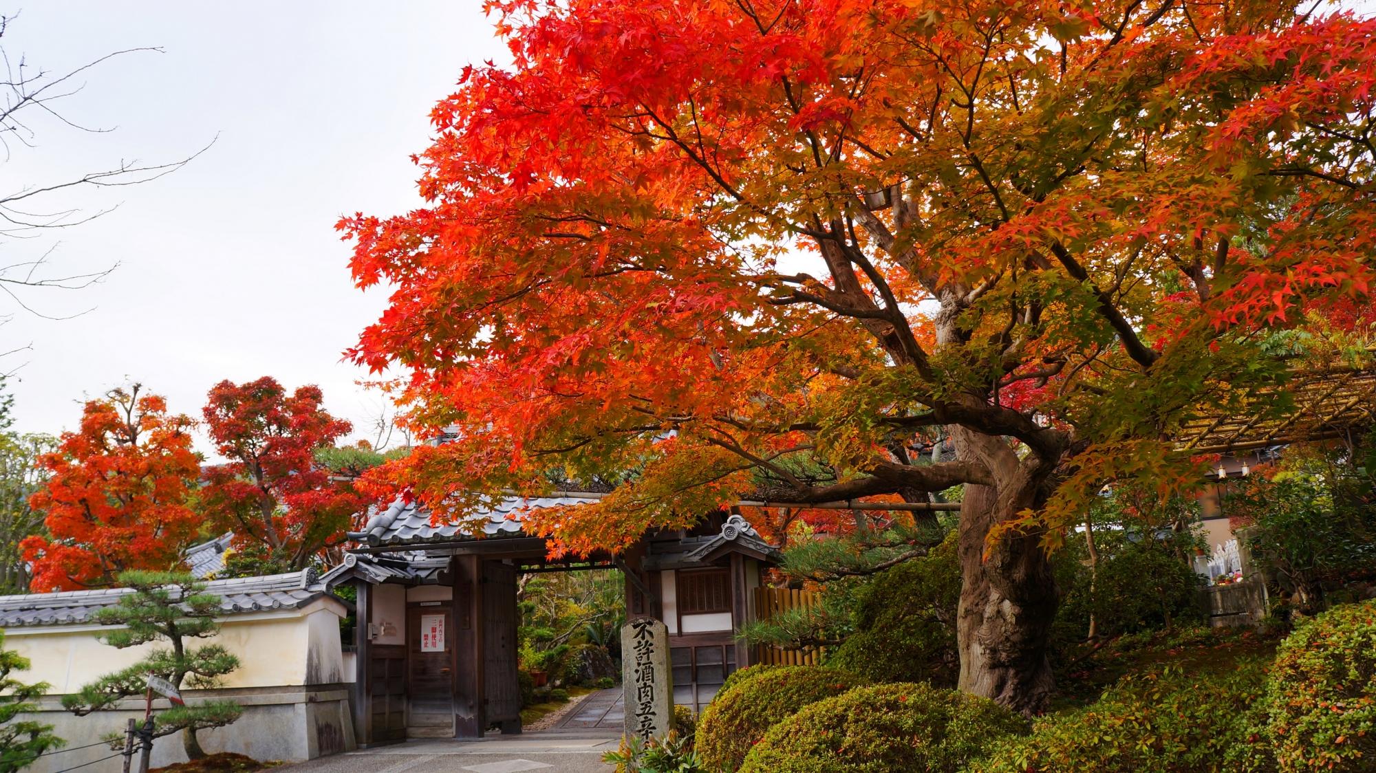 正法寺の見事な紅葉と秋色の情景