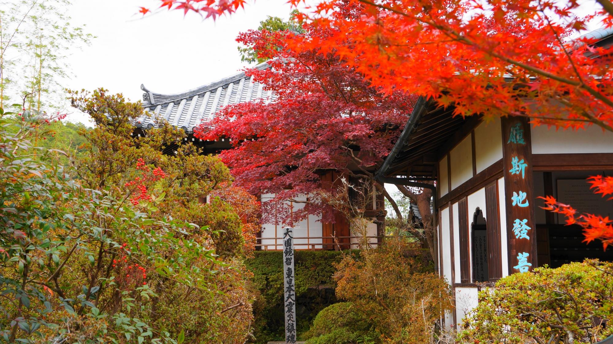 円通寺玄関横の紅葉