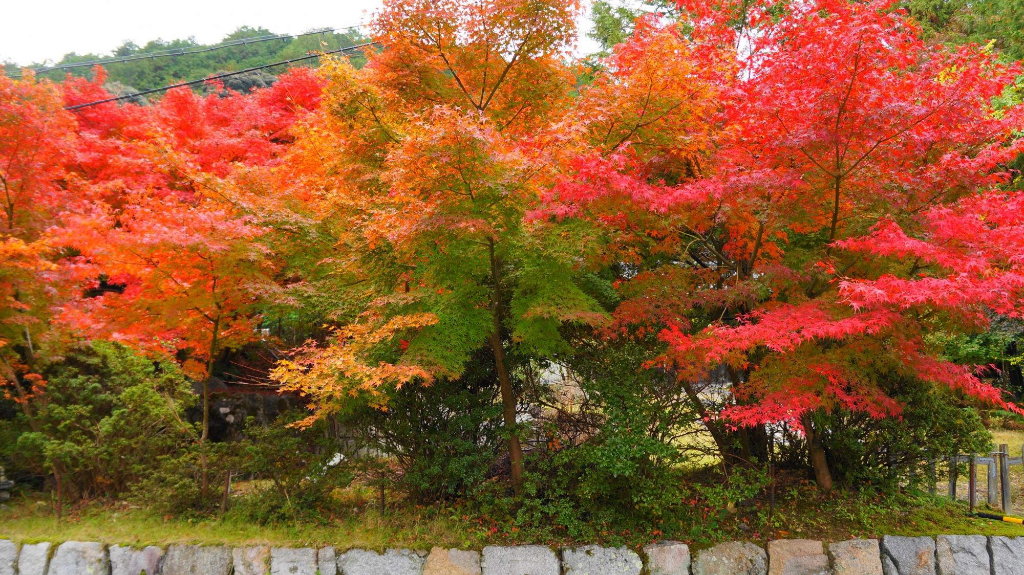 円通寺の山門付近の紅葉
