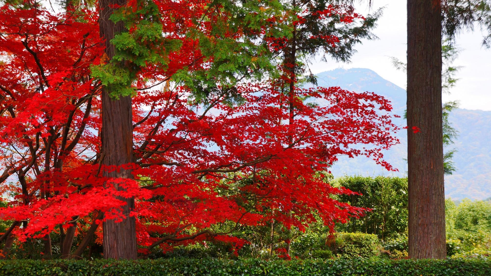 円通寺の紅葉と比叡山