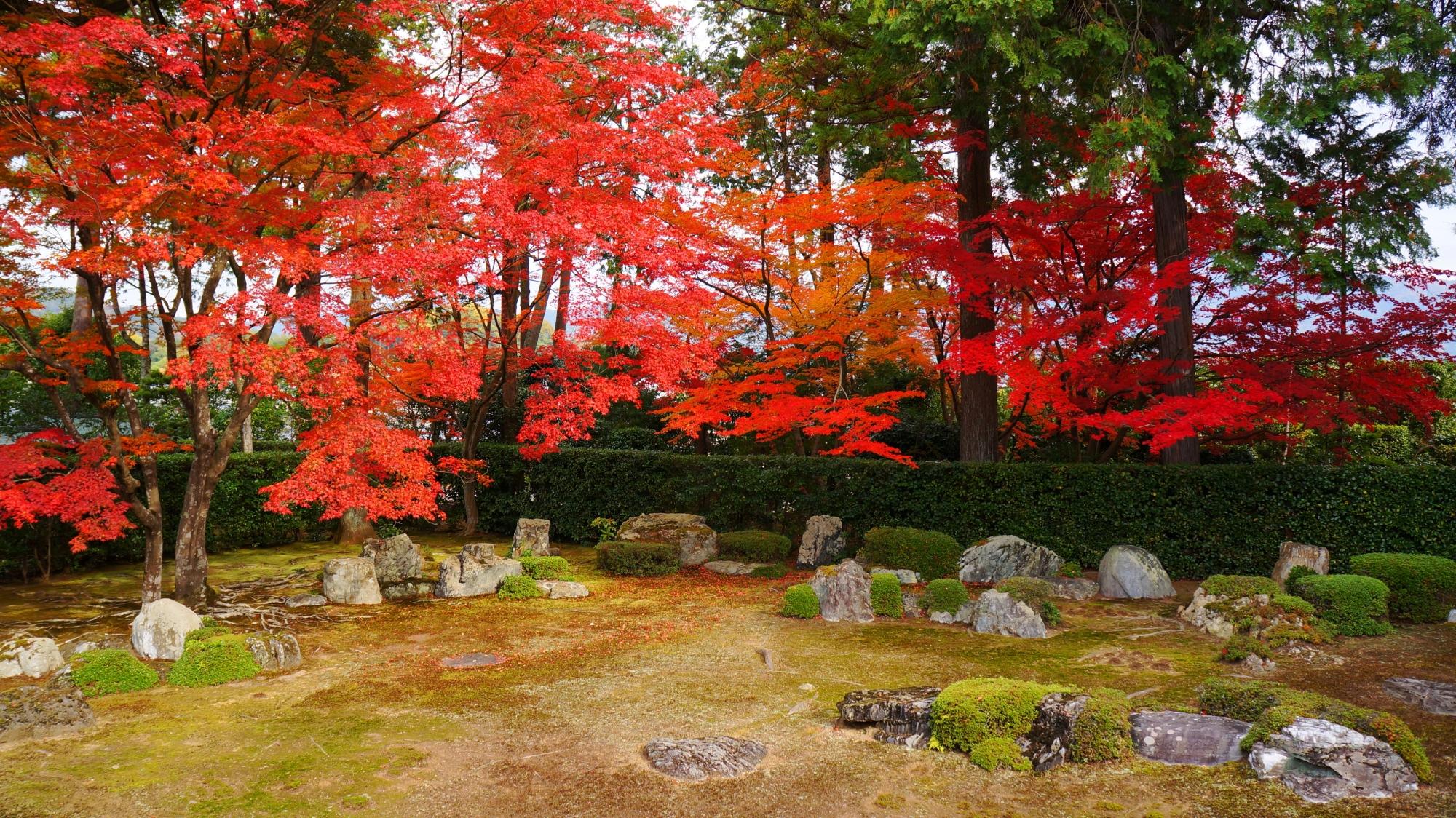 円通寺の鮮烈な赤さの紅葉と岩や刈り込み