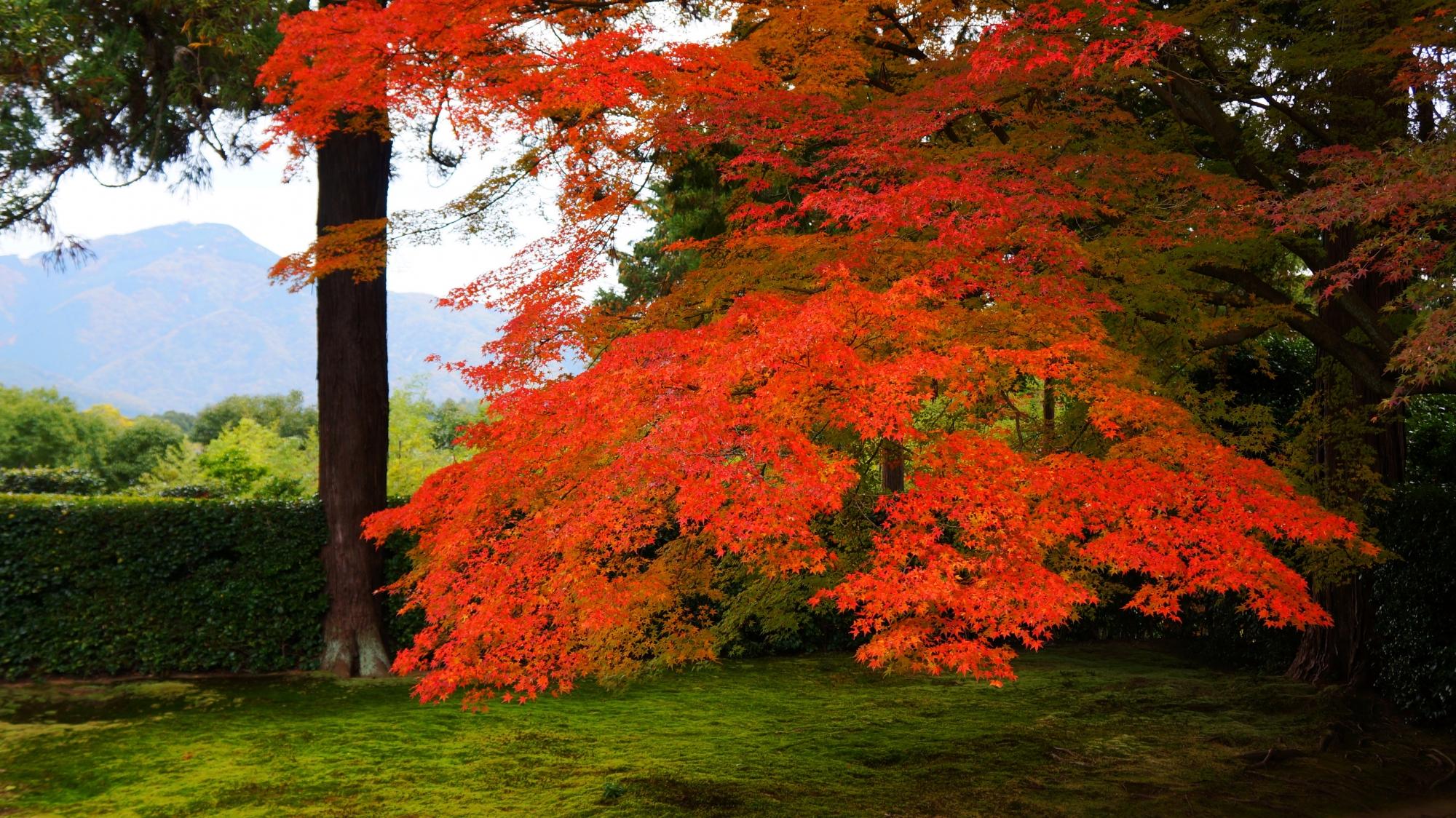 円通寺の美しい紅葉と眺望