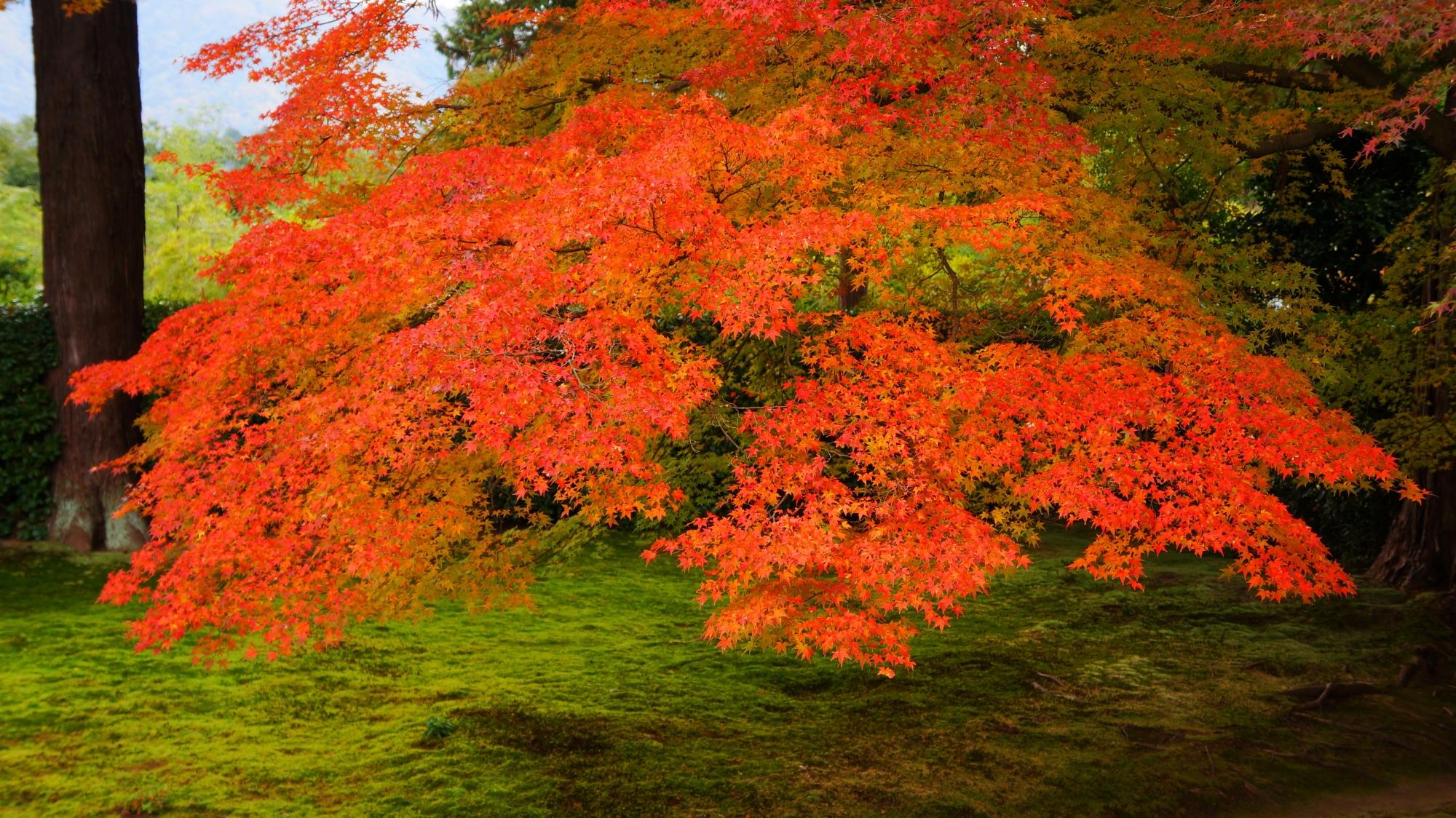 円通寺の鮮やかな見事な色合いの紅葉