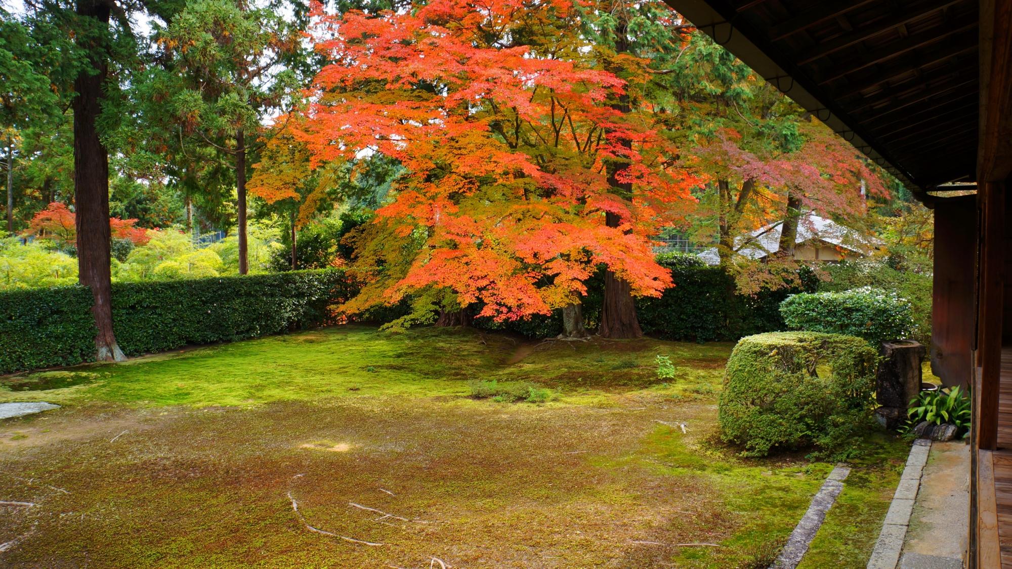 円通寺の比叡山借景庭園の紅葉と緑の苔
