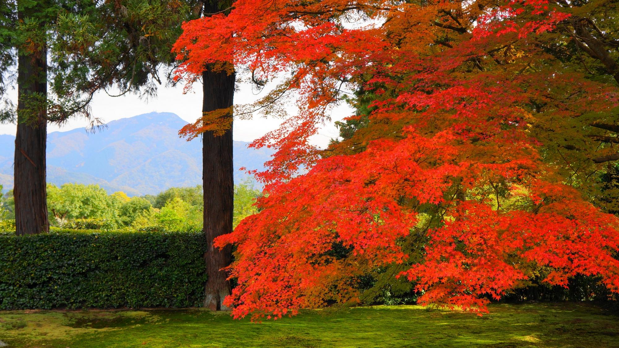 円通寺のオレンジ色の紅葉と比叡山