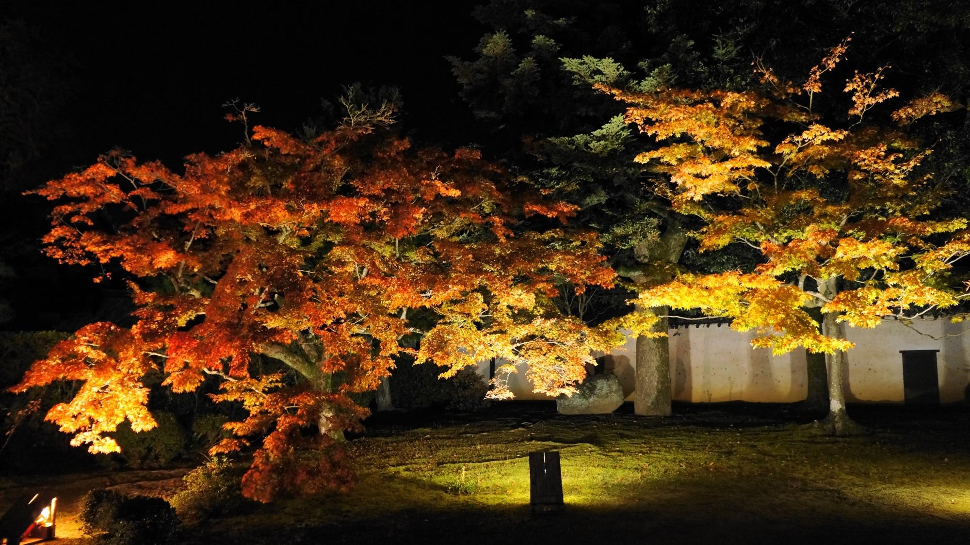 随心院の庫裡前の浮かび上がる紅葉
