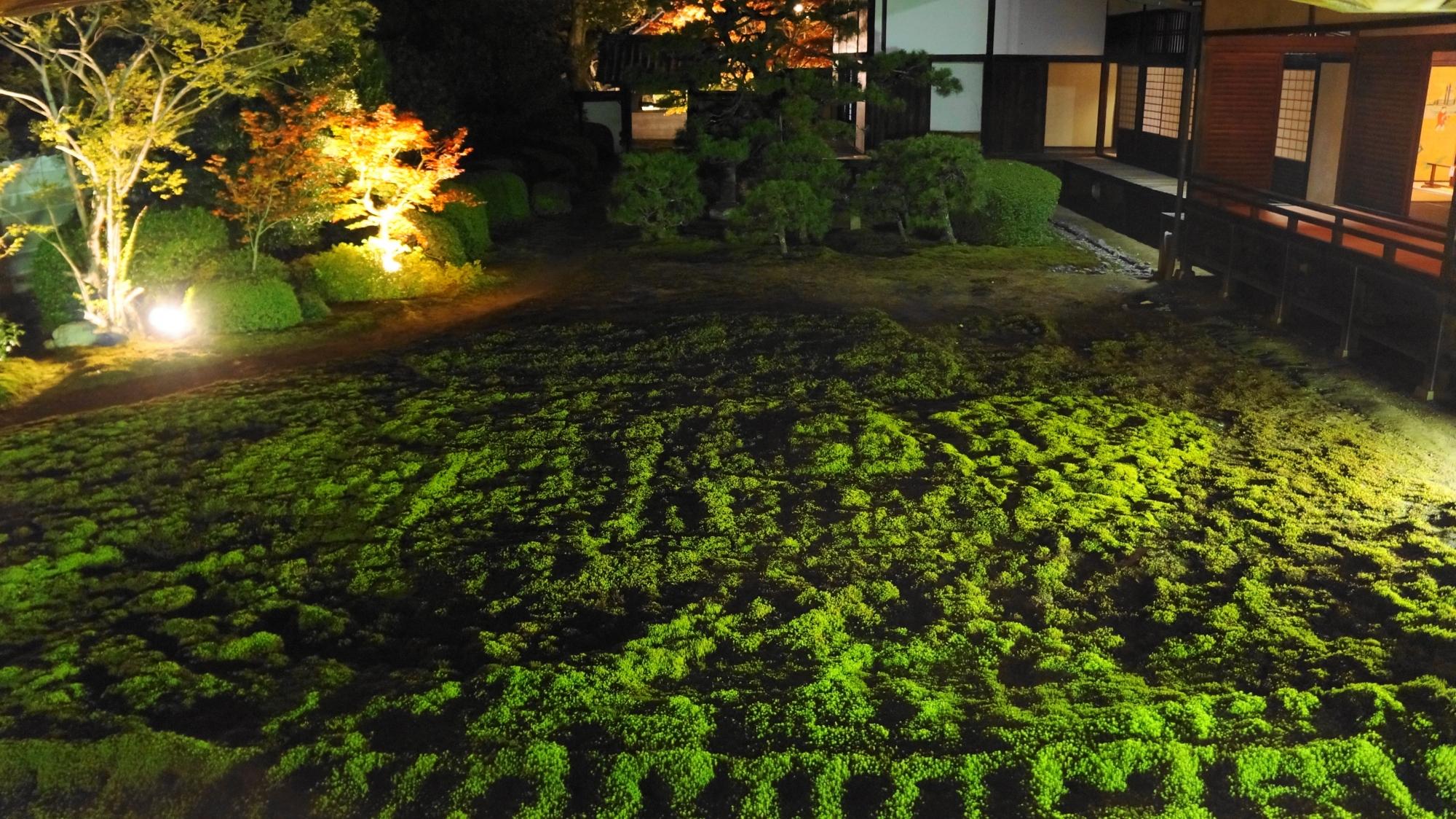 綺麗な照らされた鮮やかな緑の苔