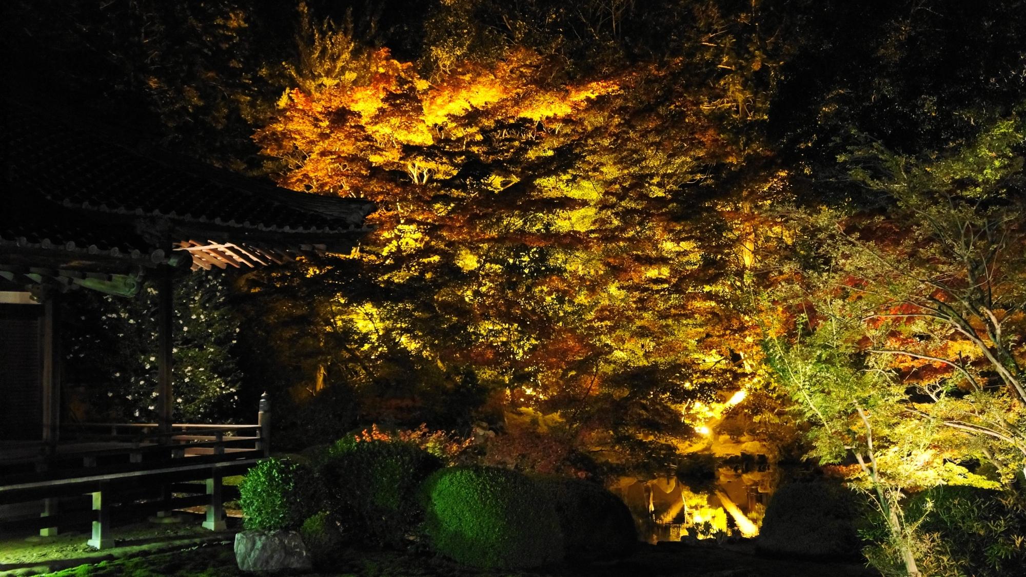 暗闇の中で浮かび上がる優雅な紅葉