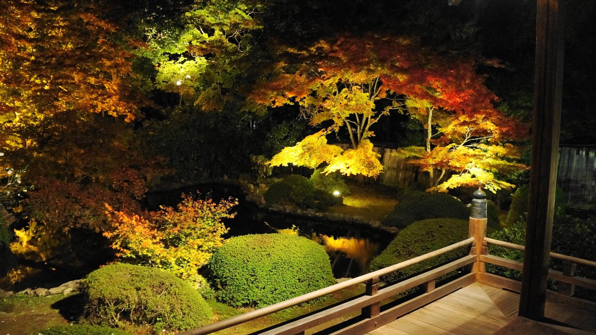 水辺を染めるライトアップされた淡い紅葉