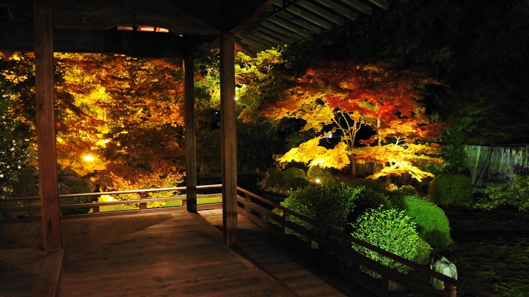 本堂から眺めた夜を染める多彩な秋色