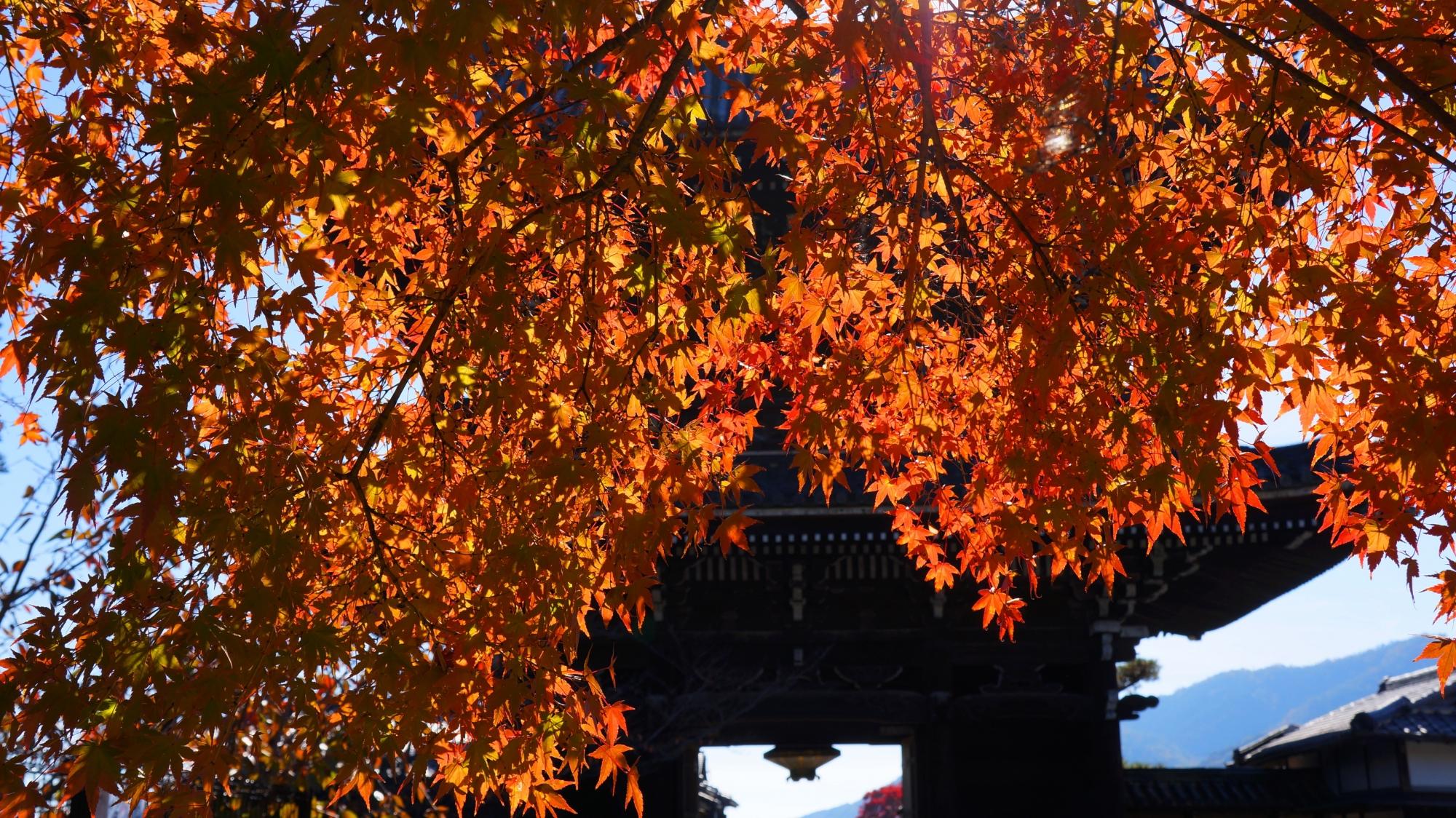 清涼寺の境内から眺めた仁王門と紅葉