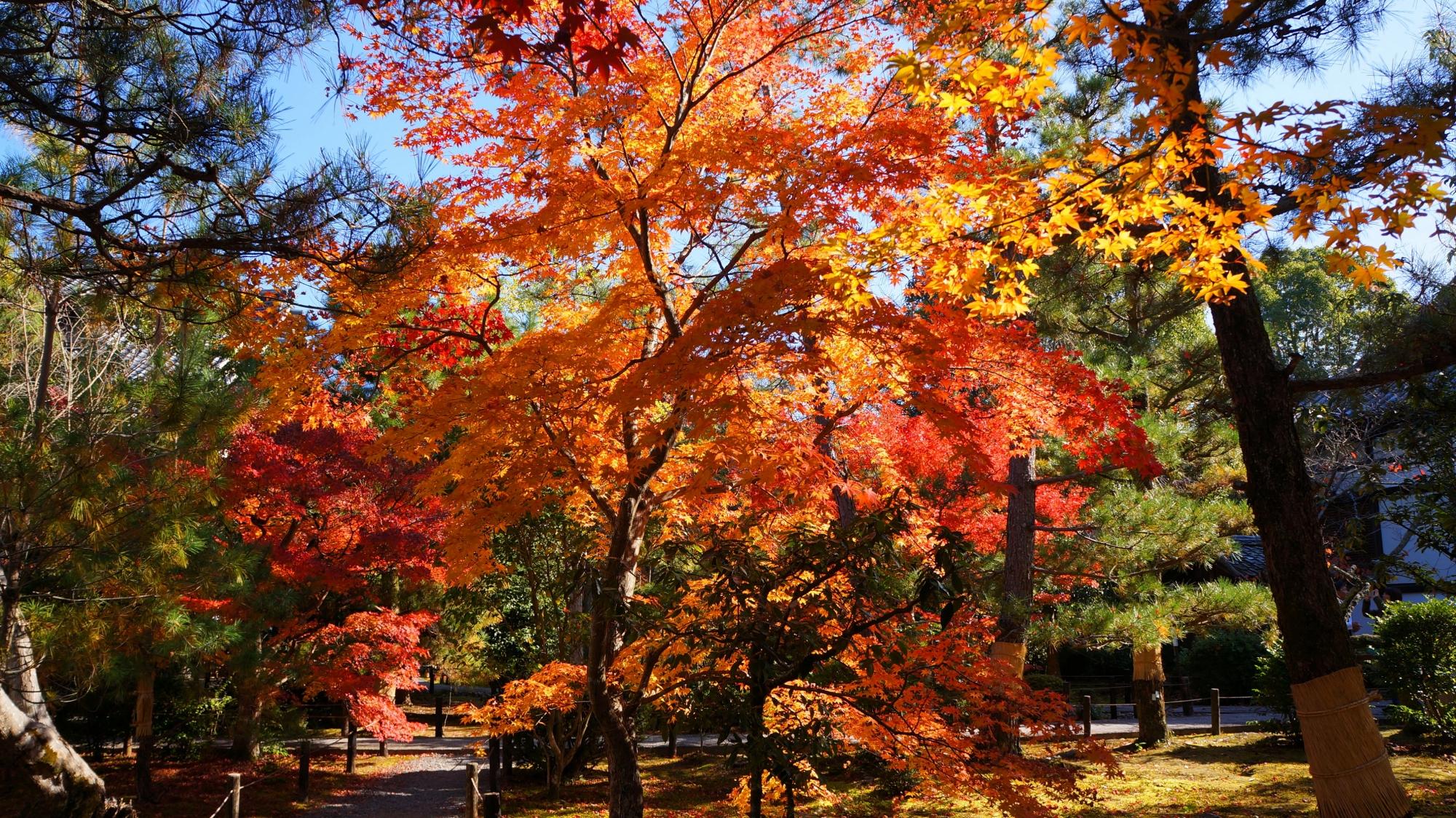 広がる華やかな紅葉の空間