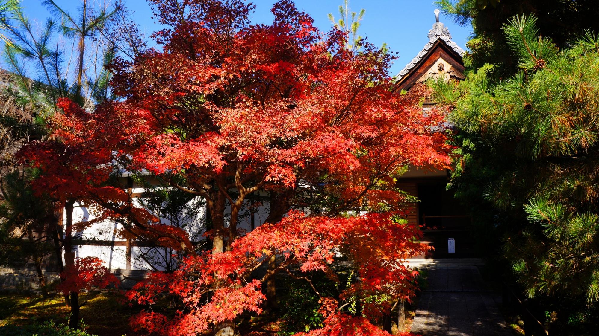 清涼寺の庫裡の紅葉