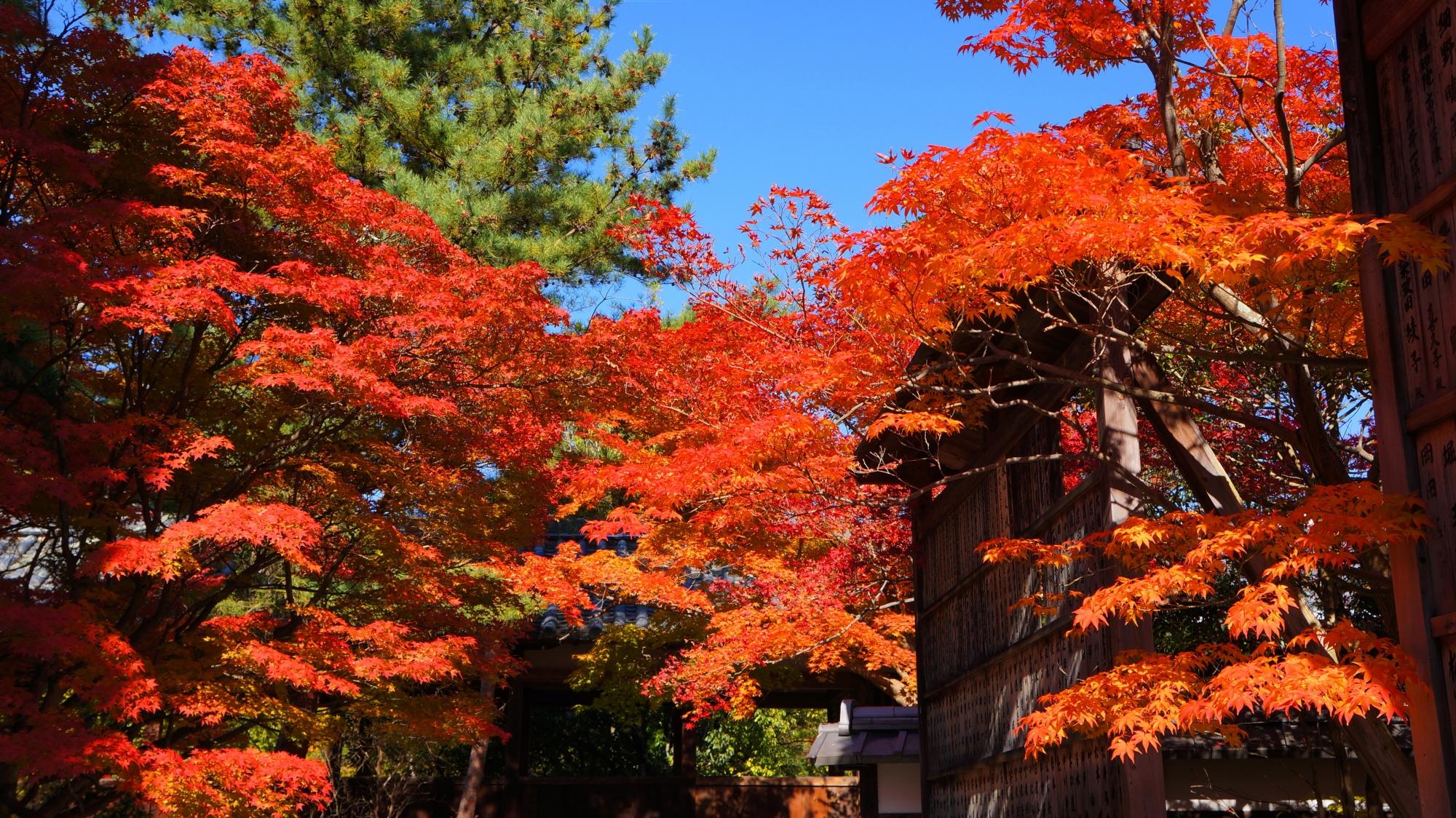清涼寺の書院の紅葉