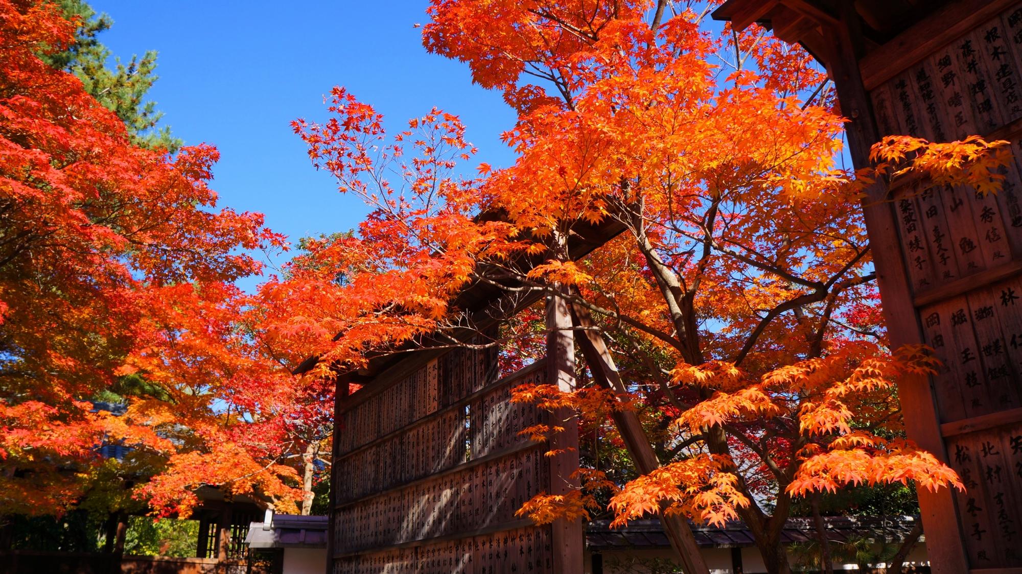 青空に映える煌びやかな紅葉