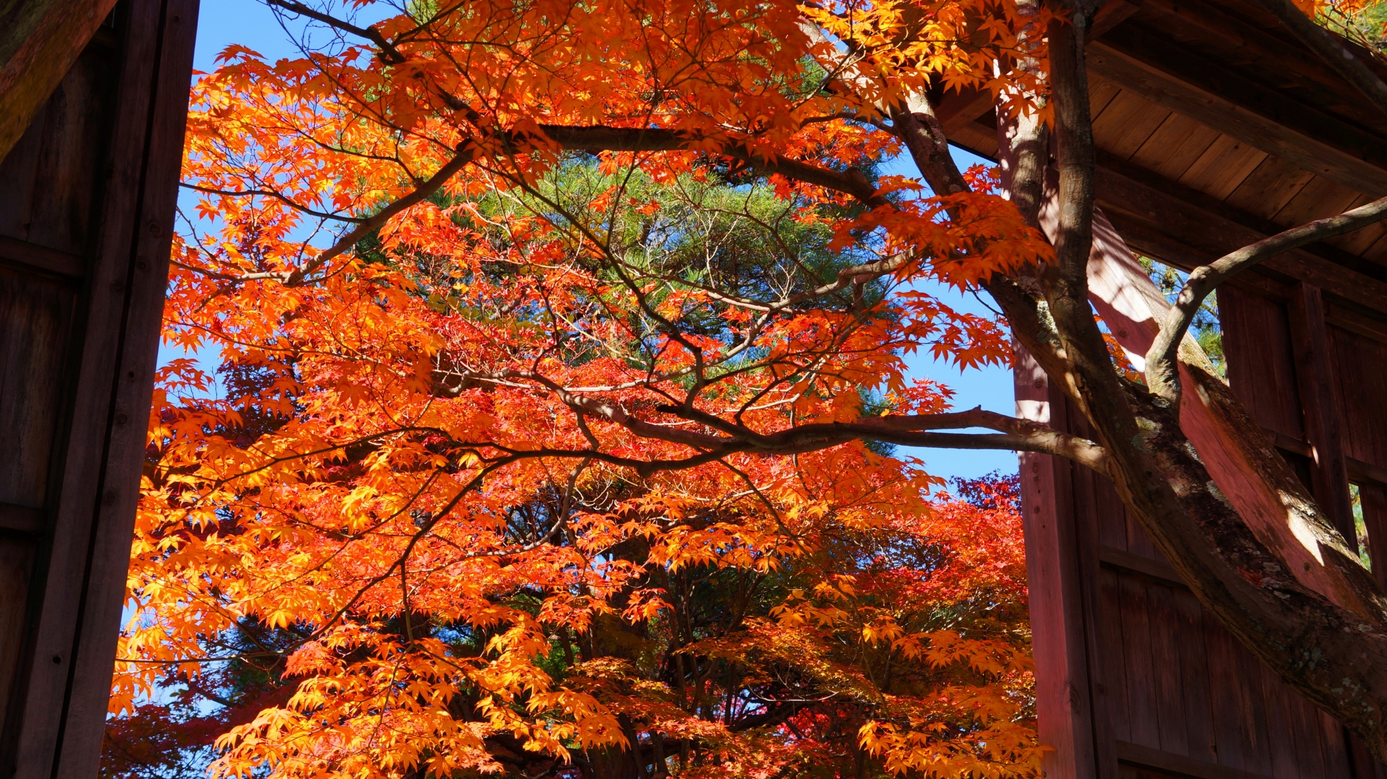 無料で紅葉が楽しめる清涼寺