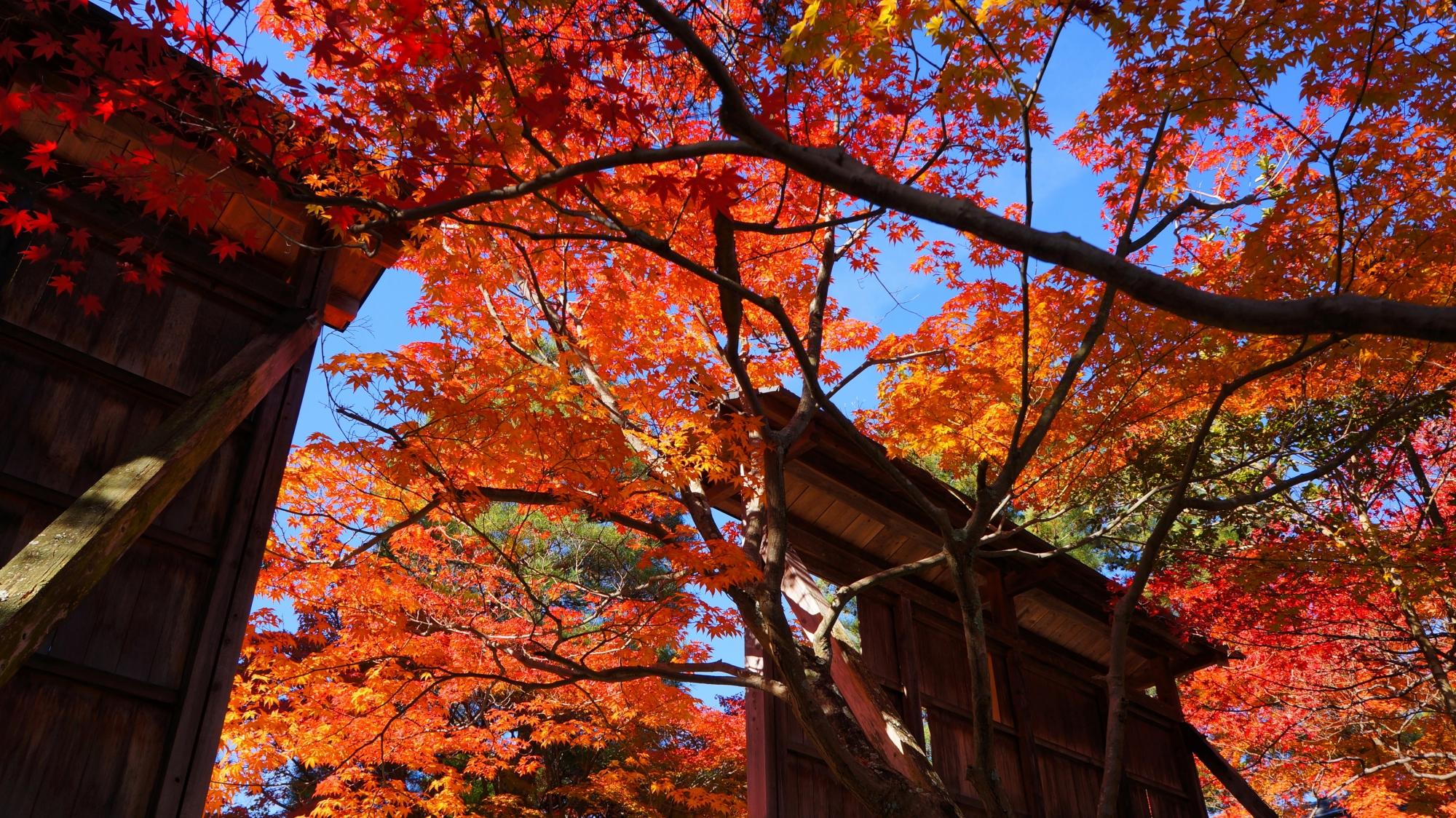 名札が掛けられた木の板の絶品の紅葉