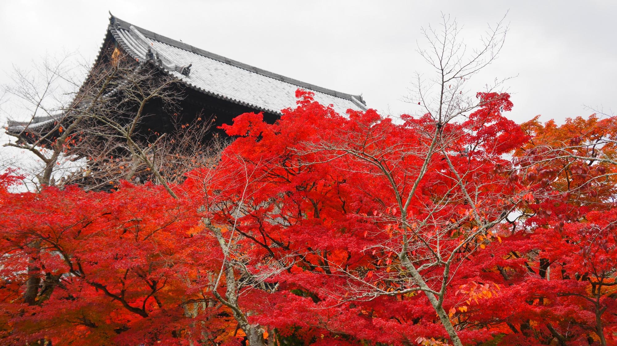 三門をつつむ燃えるような真っ赤な紅葉