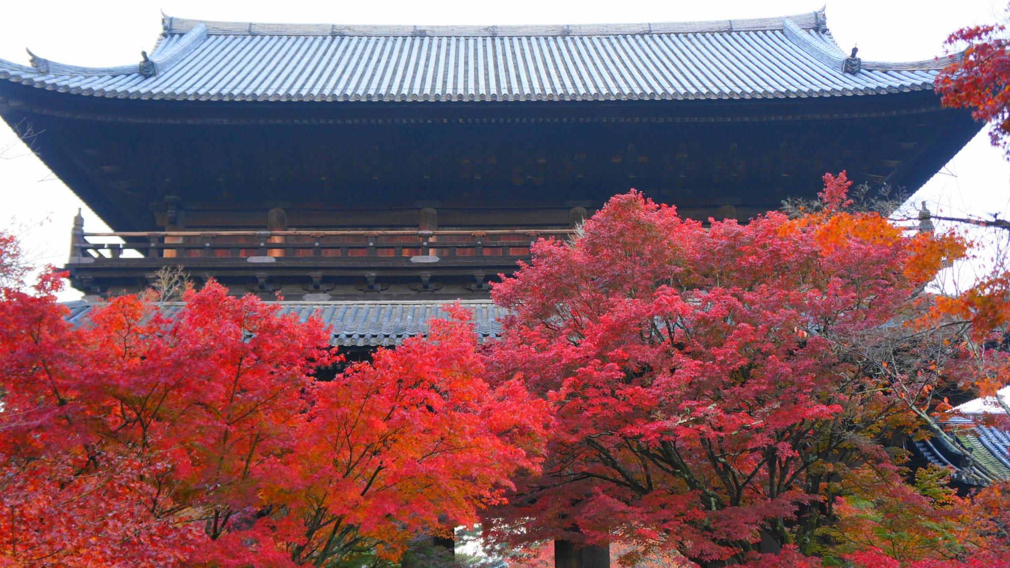豪快に色づく三門前の紅葉