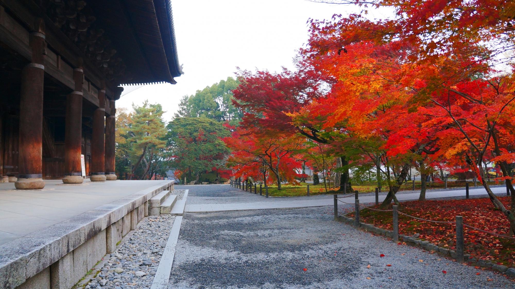 巨大な三門を彩る多彩な紅葉