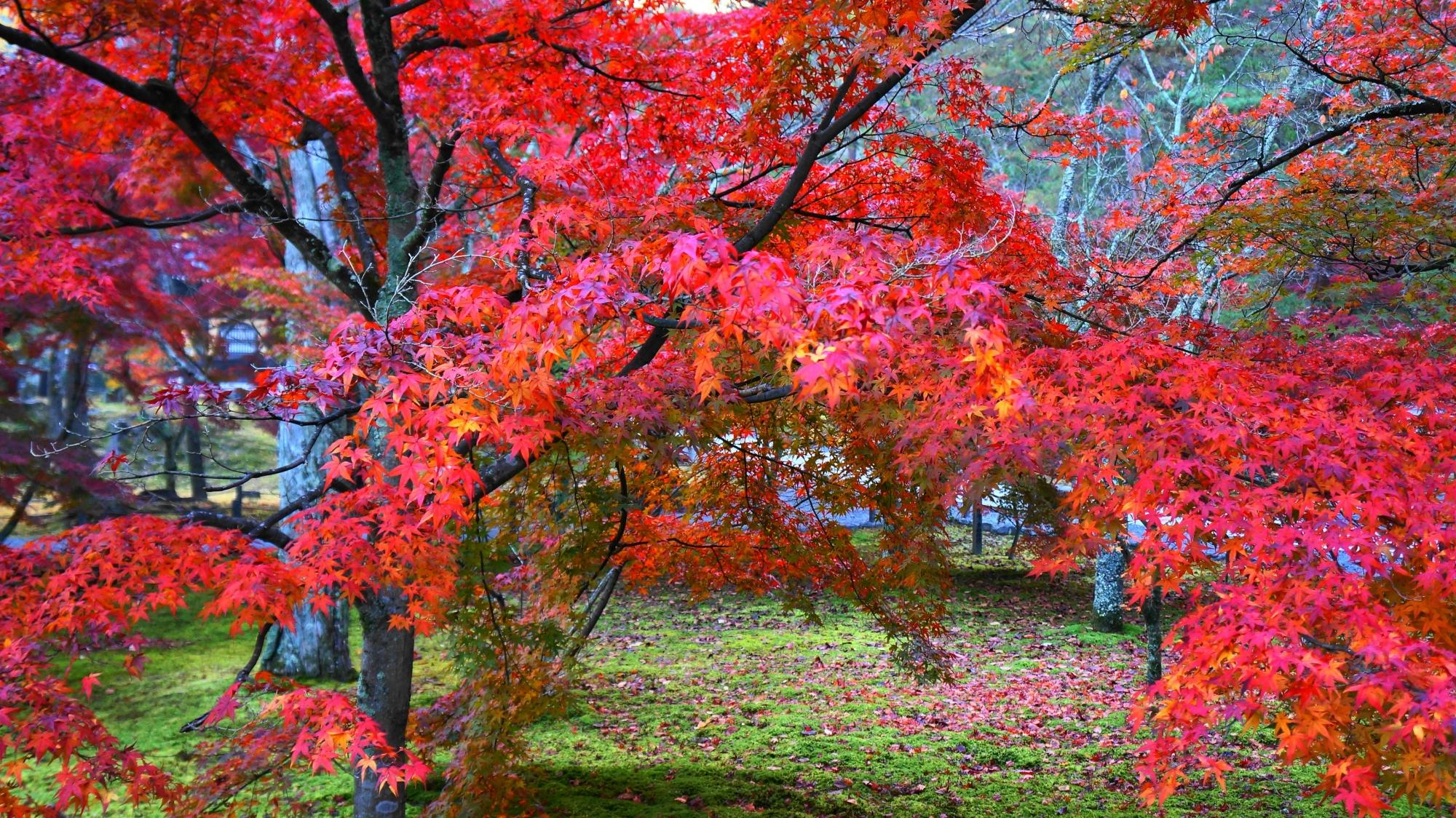 緑の苔の上で華やぐ多彩な紅葉