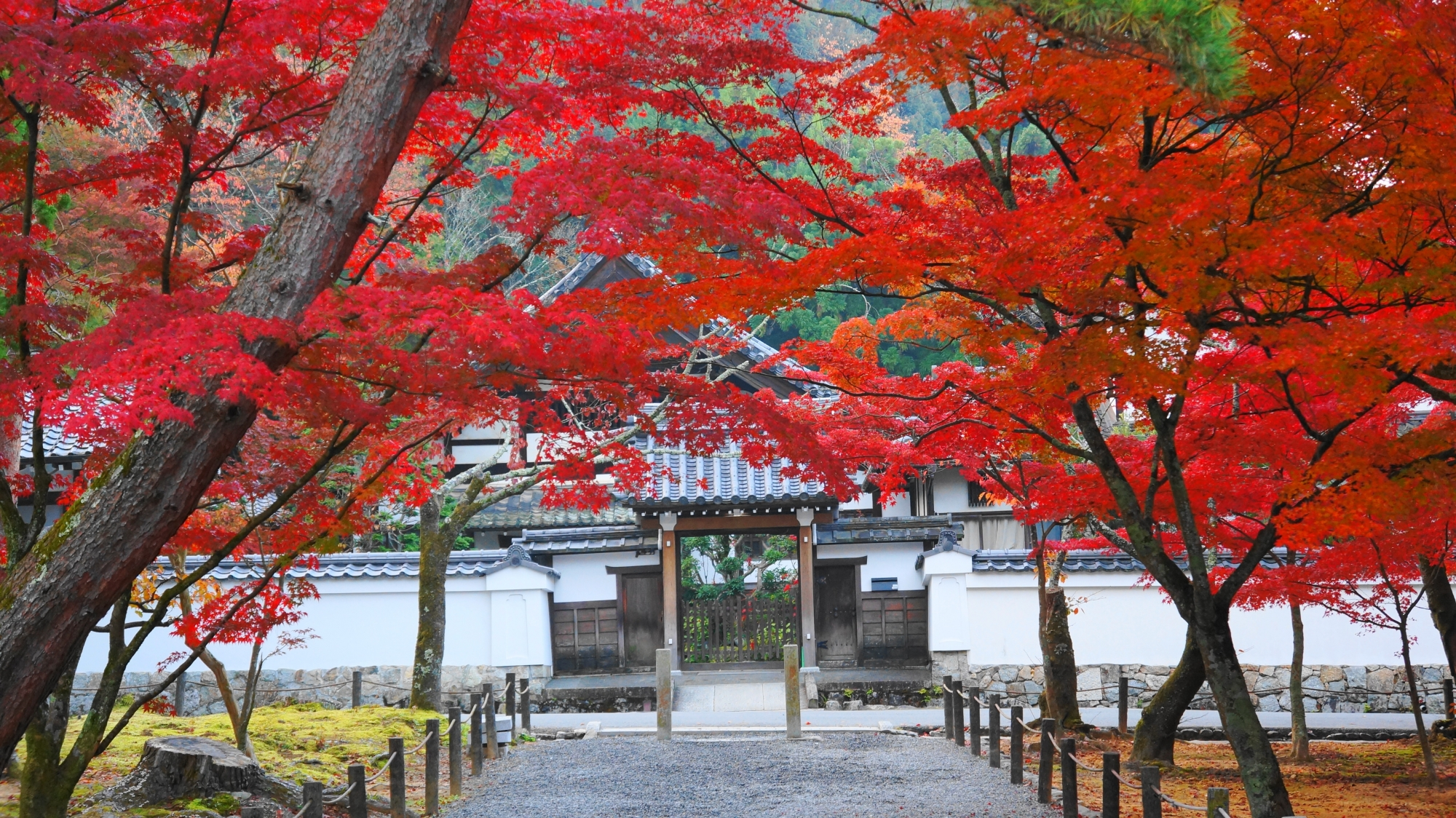 鮮やかな紅葉のトンネルの先に佇む正因庵