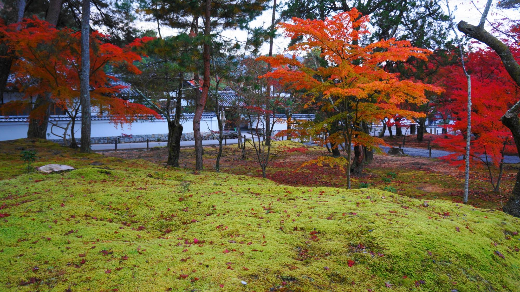 淡い苔に映える艶やかな紅葉