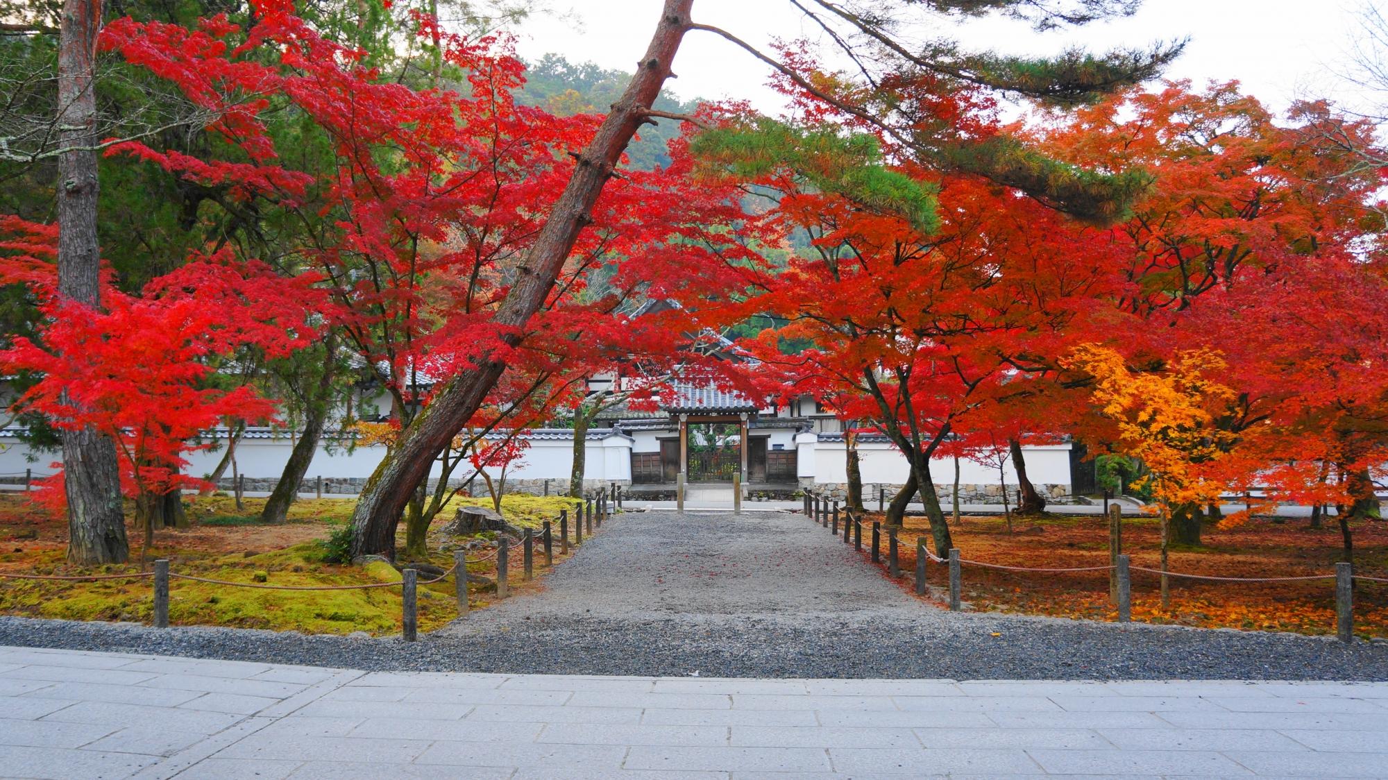 南禅寺の正因庵前の紅葉