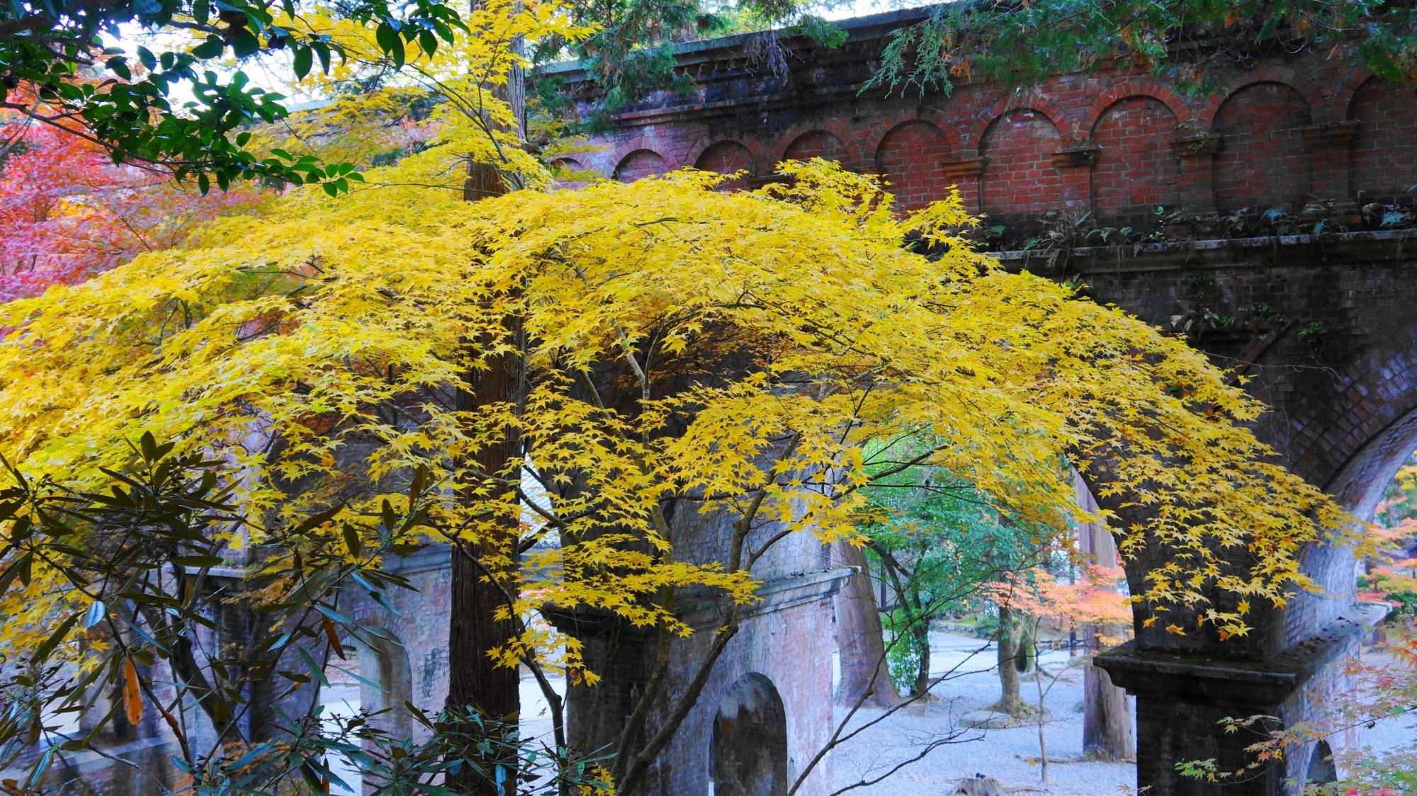 上から眺めた水路閣と華やかな紅葉