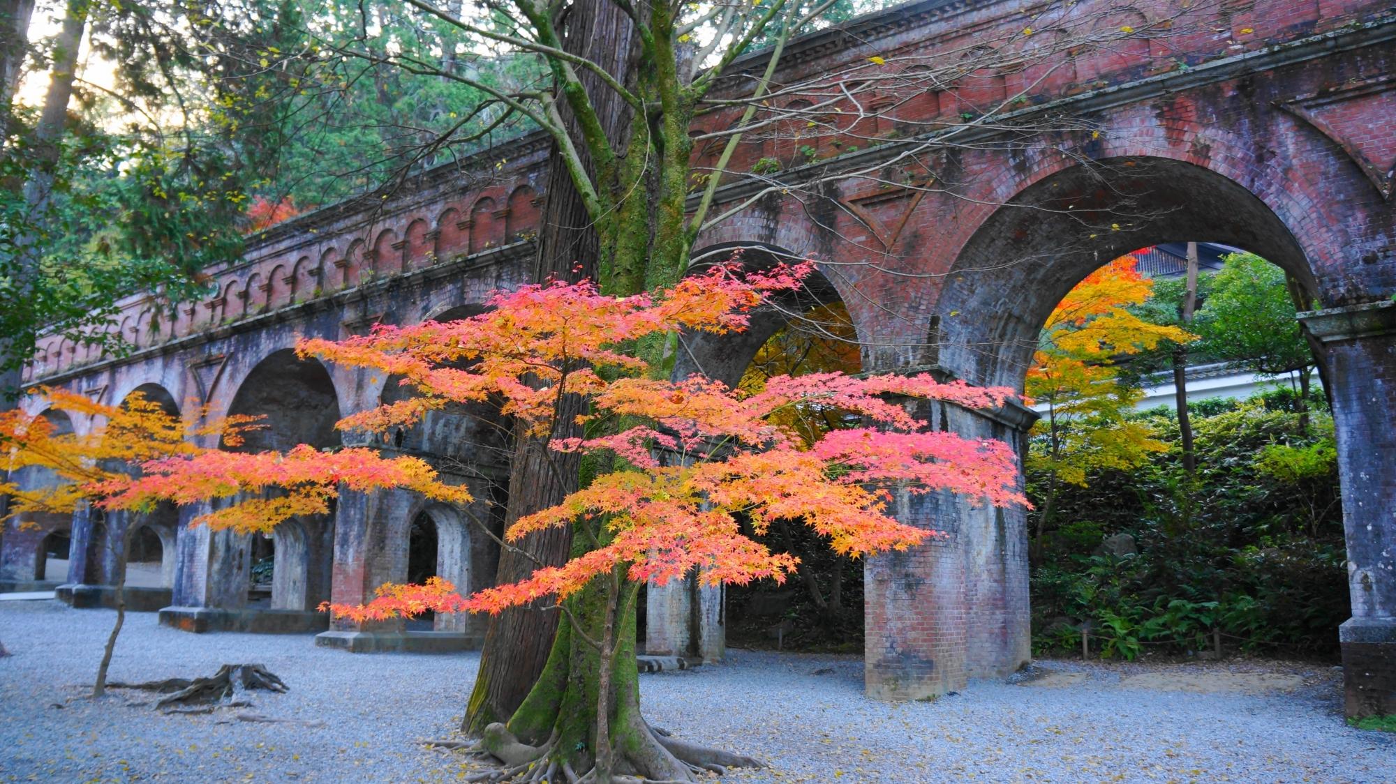 立派な水路閣を彩る絵になる紅葉