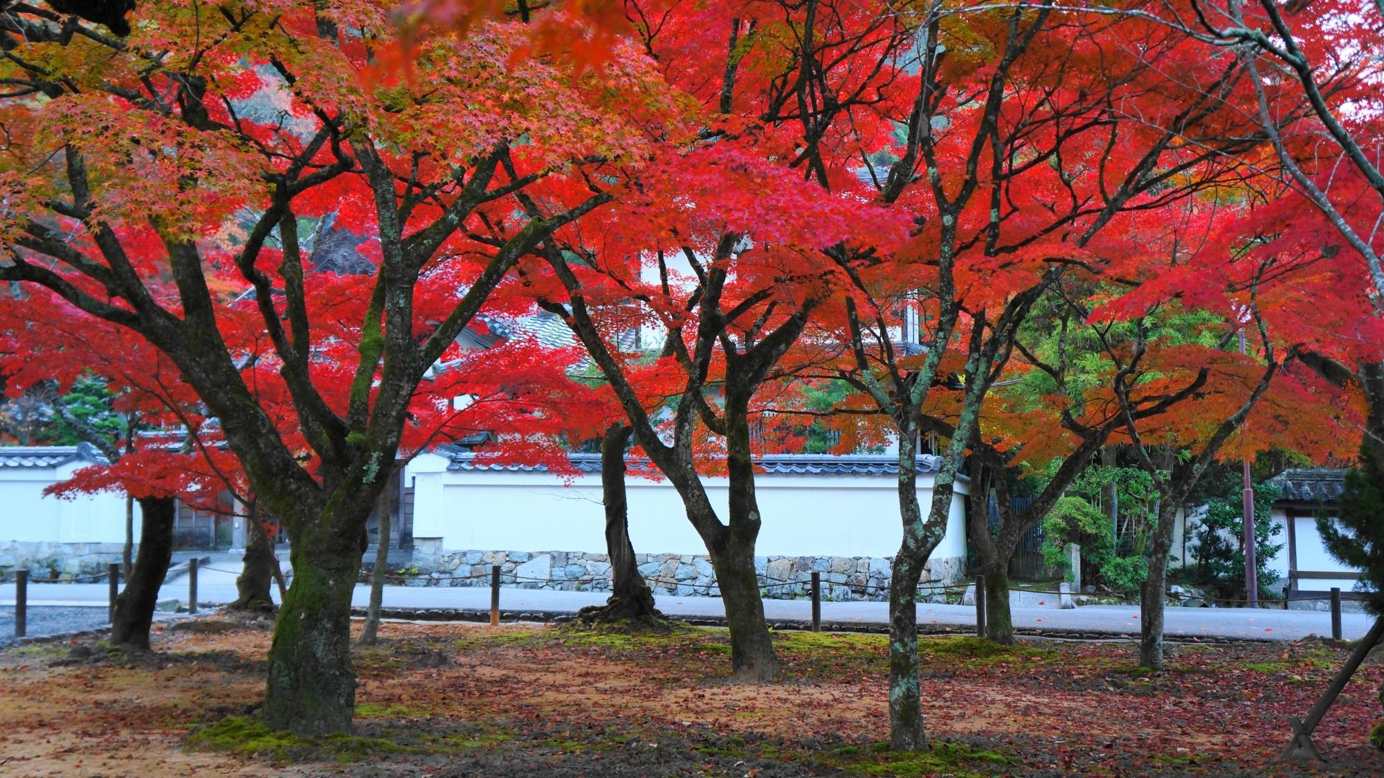 至るところ紅葉が弾ける秋の南禅寺