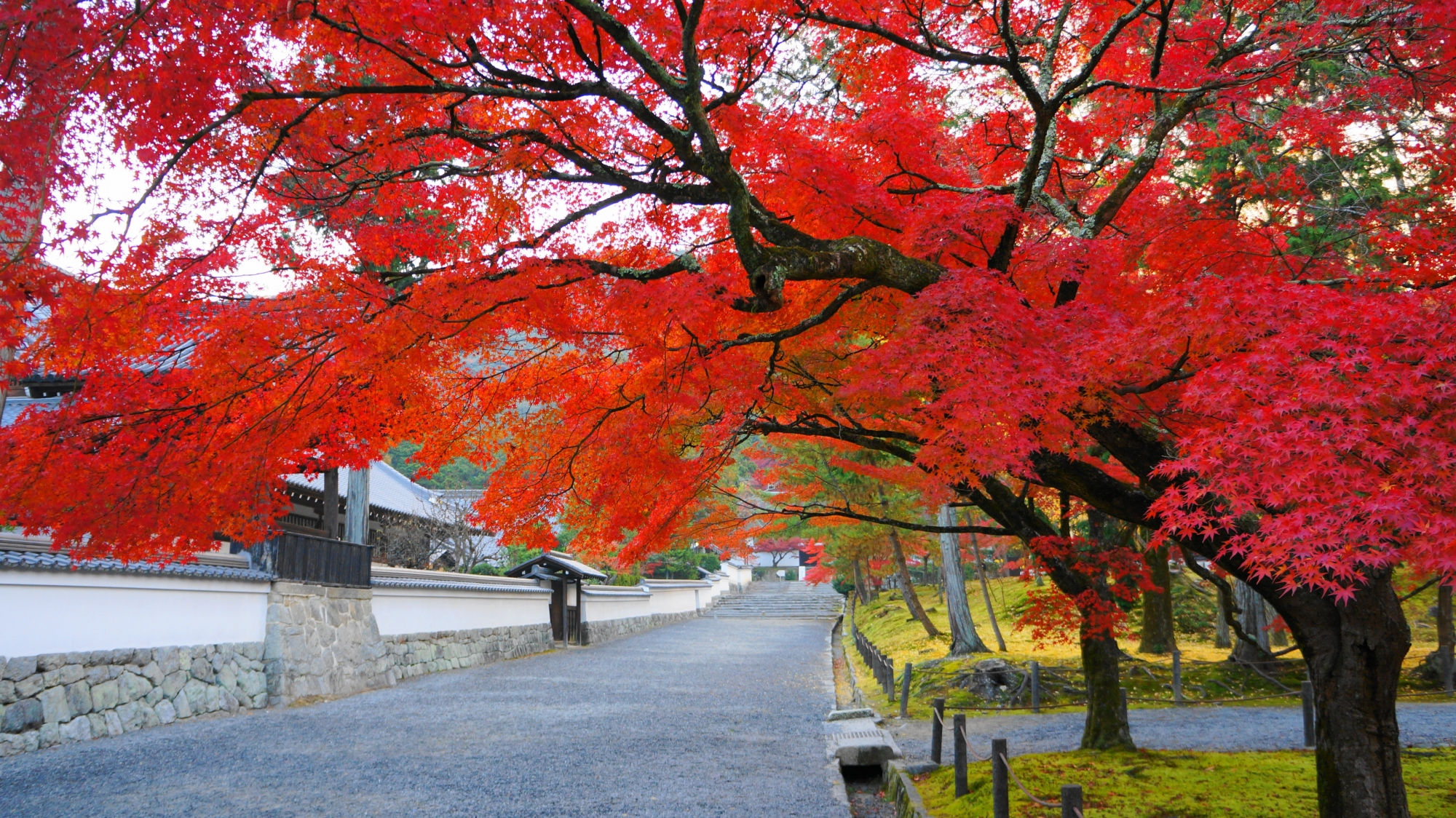 南禅寺の淡い苔と白壁に映える絶品の紅葉