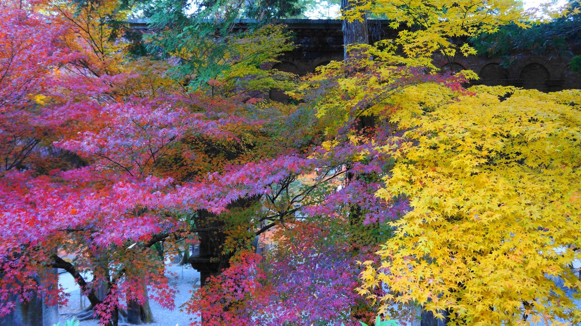 水路閣を秋色に染める赤と黄色の紅葉