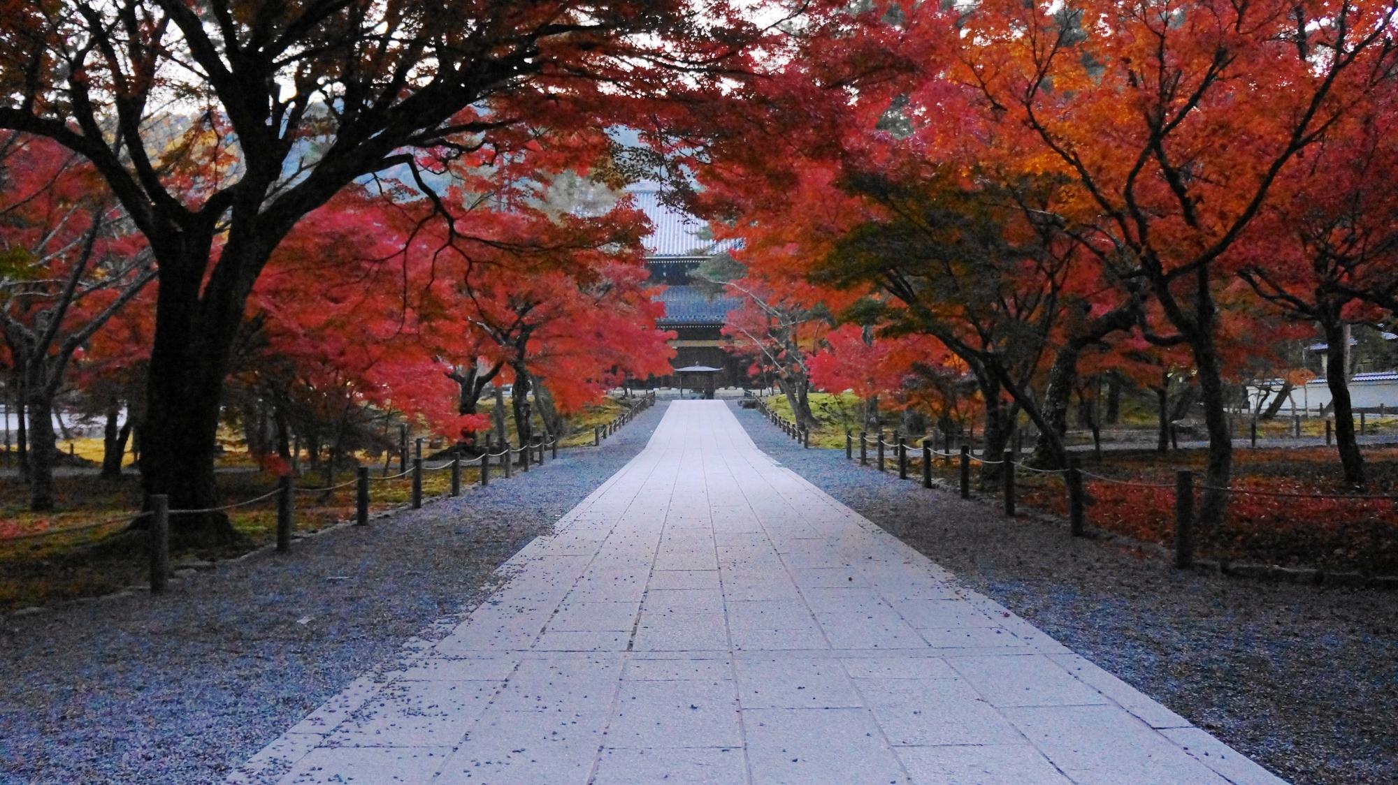 南禅寺の法堂と紅葉