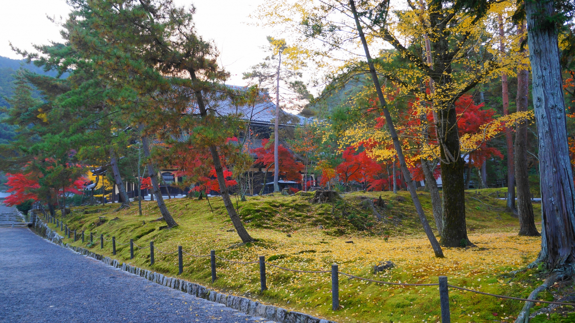 南禅寺の早朝の静かな境内で見事に色づく多様な秋色