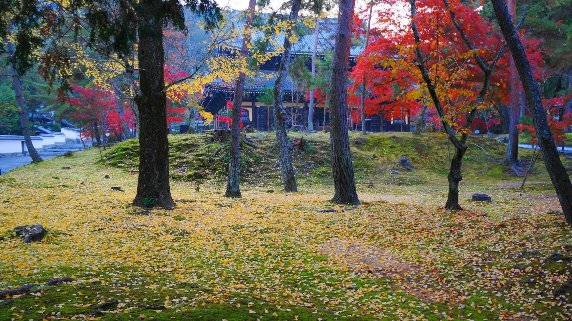 散り銀杏に染まった苔の向こうに見える南禅寺の法堂と紅葉