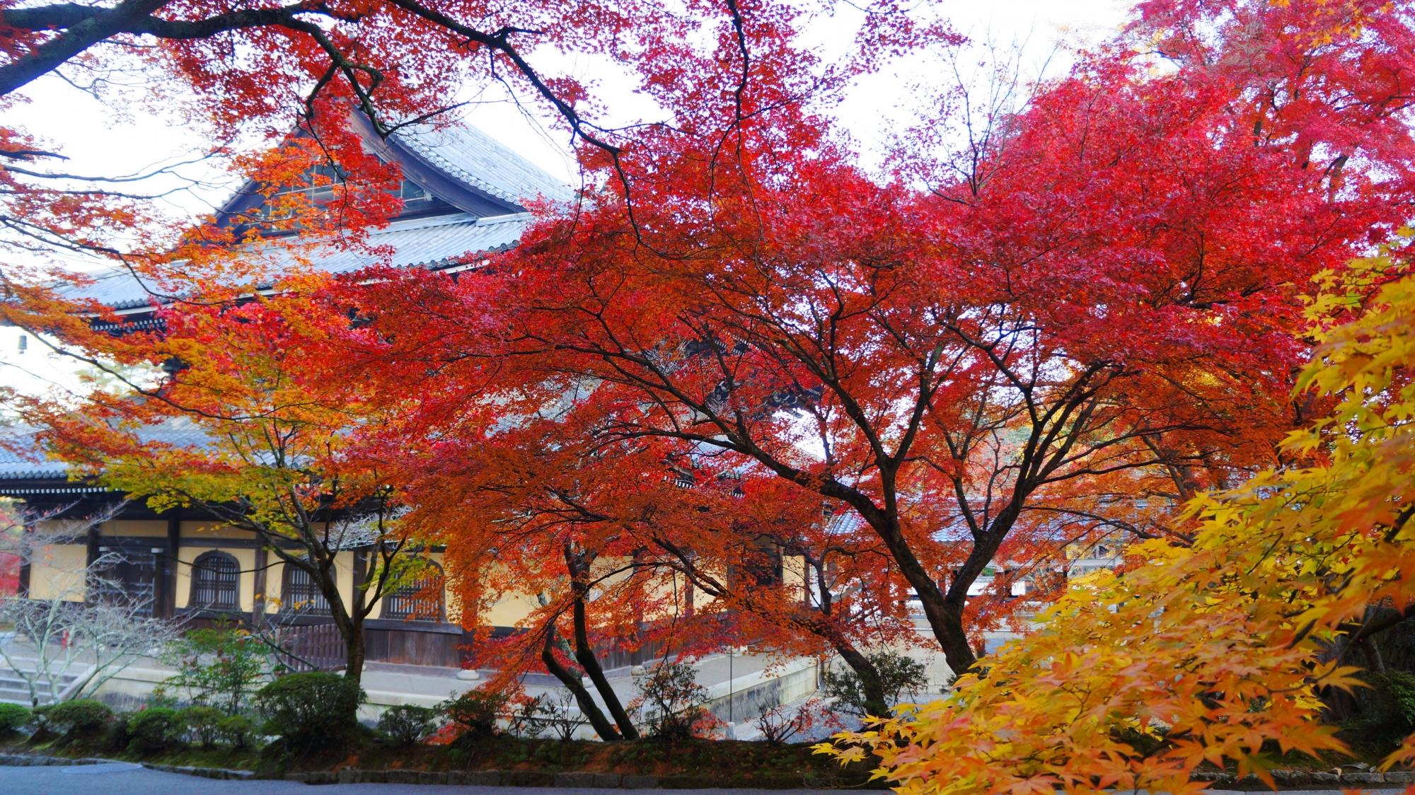 圧倒的な紅葉につつまれる法堂