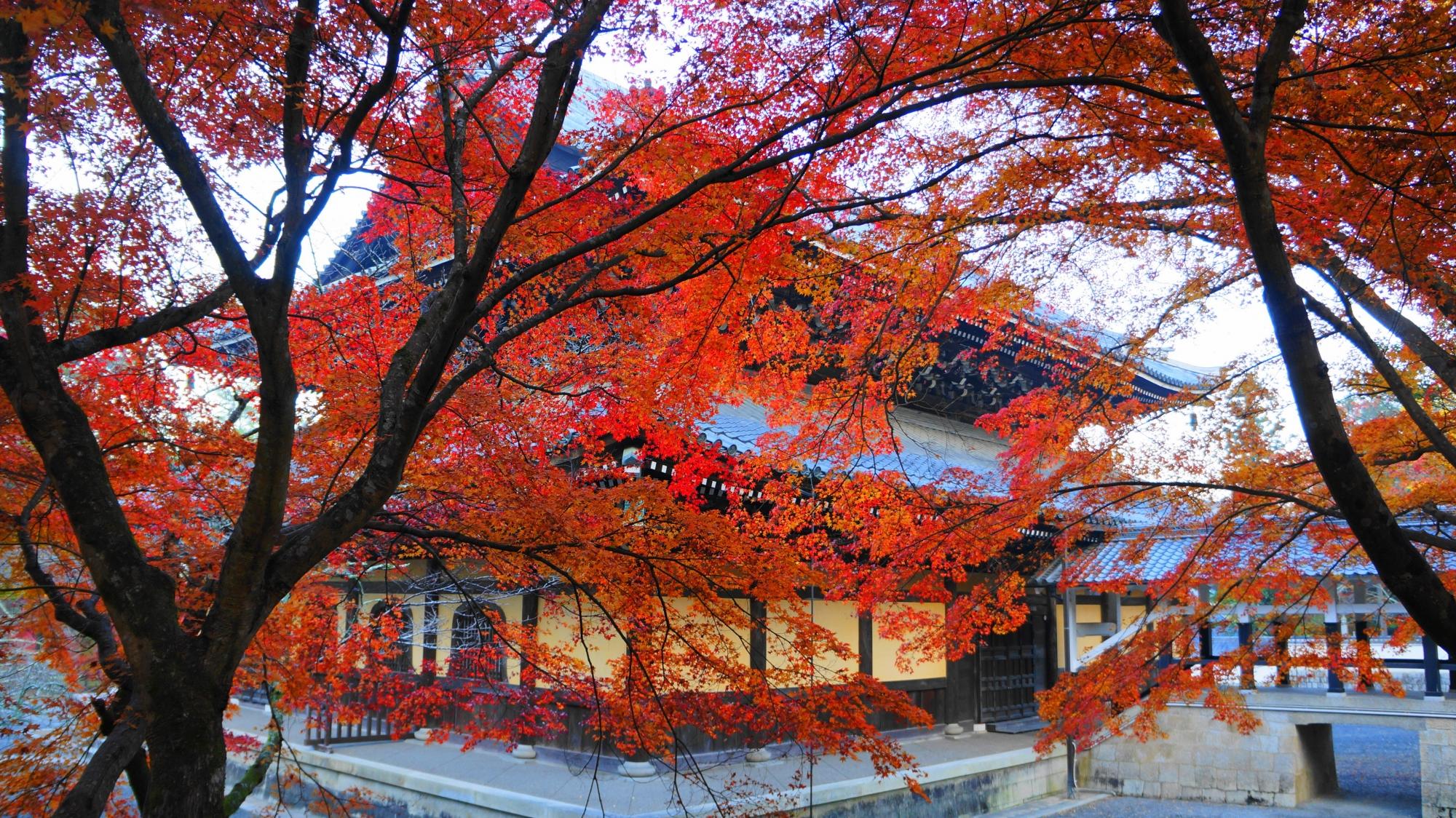 高画質 南禅寺 法堂 紅葉 画像