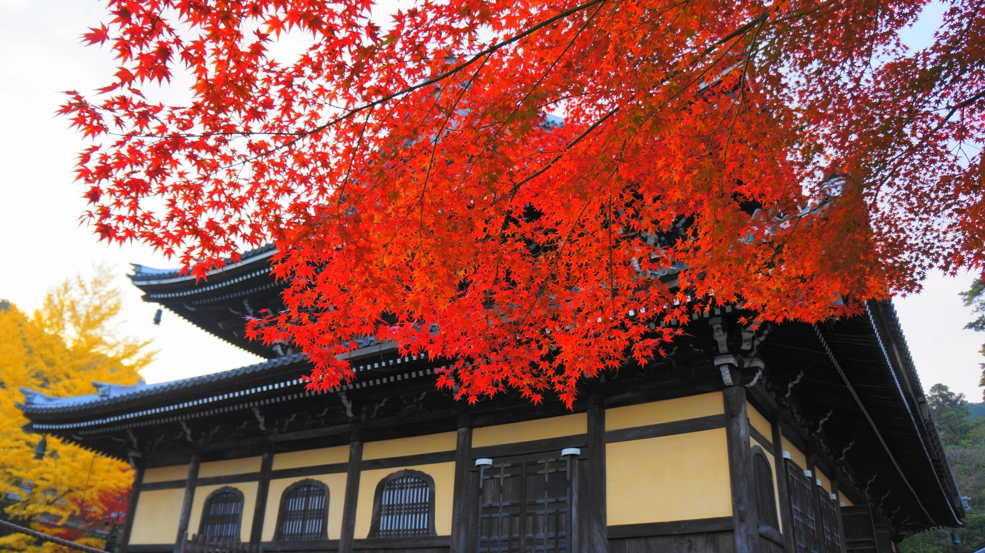 法堂に降り注ぐ鮮烈な色合いの真っ赤な紅葉