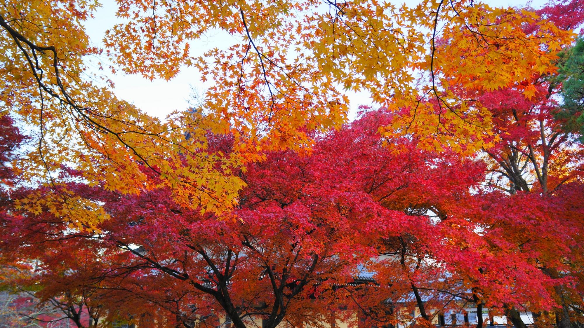 赤や黄色などの多彩な紅葉が溢れる南禅寺